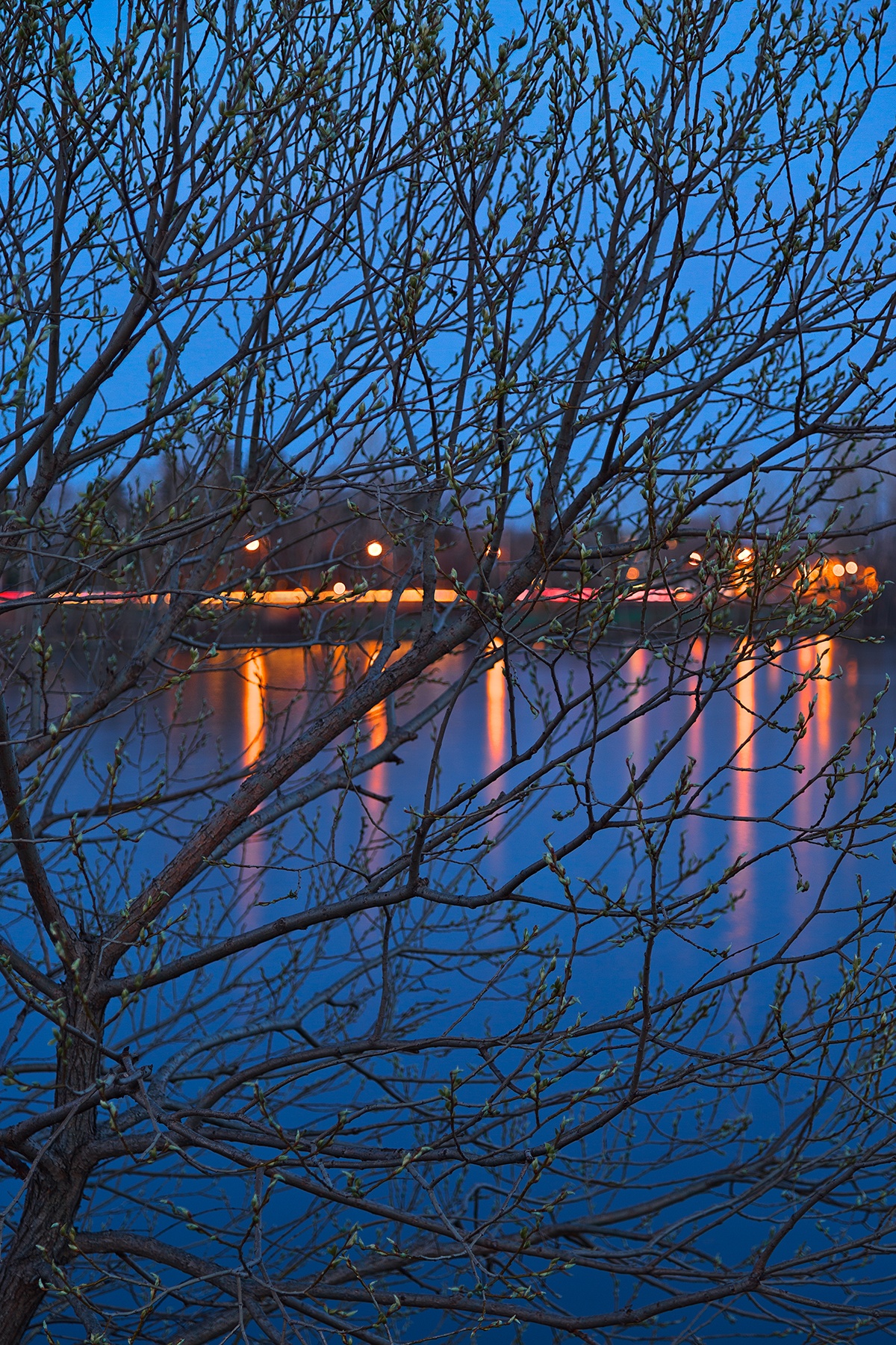 Budding Twilight Spring - HDR, Abstract, Pure, Saint, River, HQ Photo