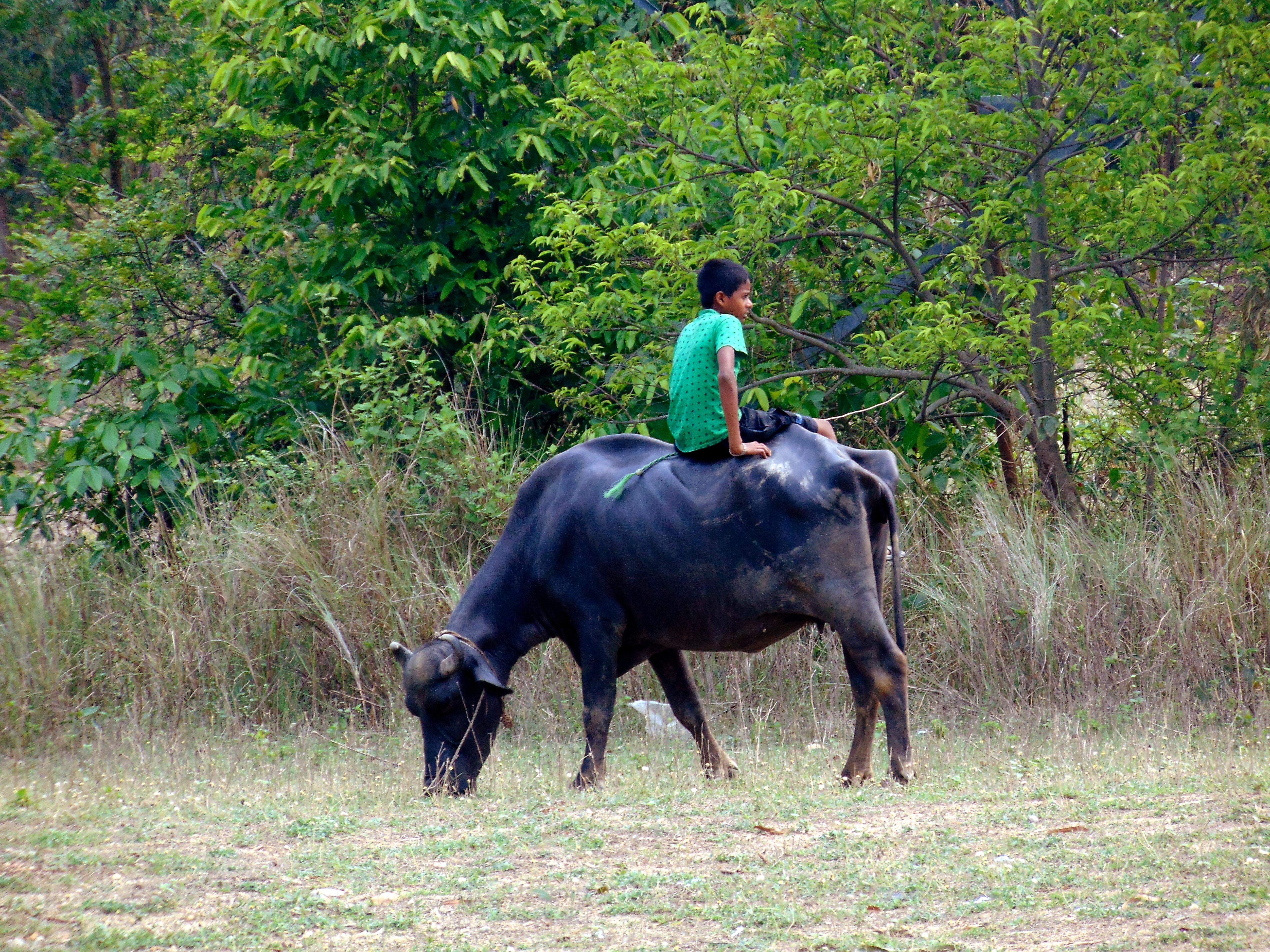 File:Buffalo Ride.jpg - Wikimedia Commons