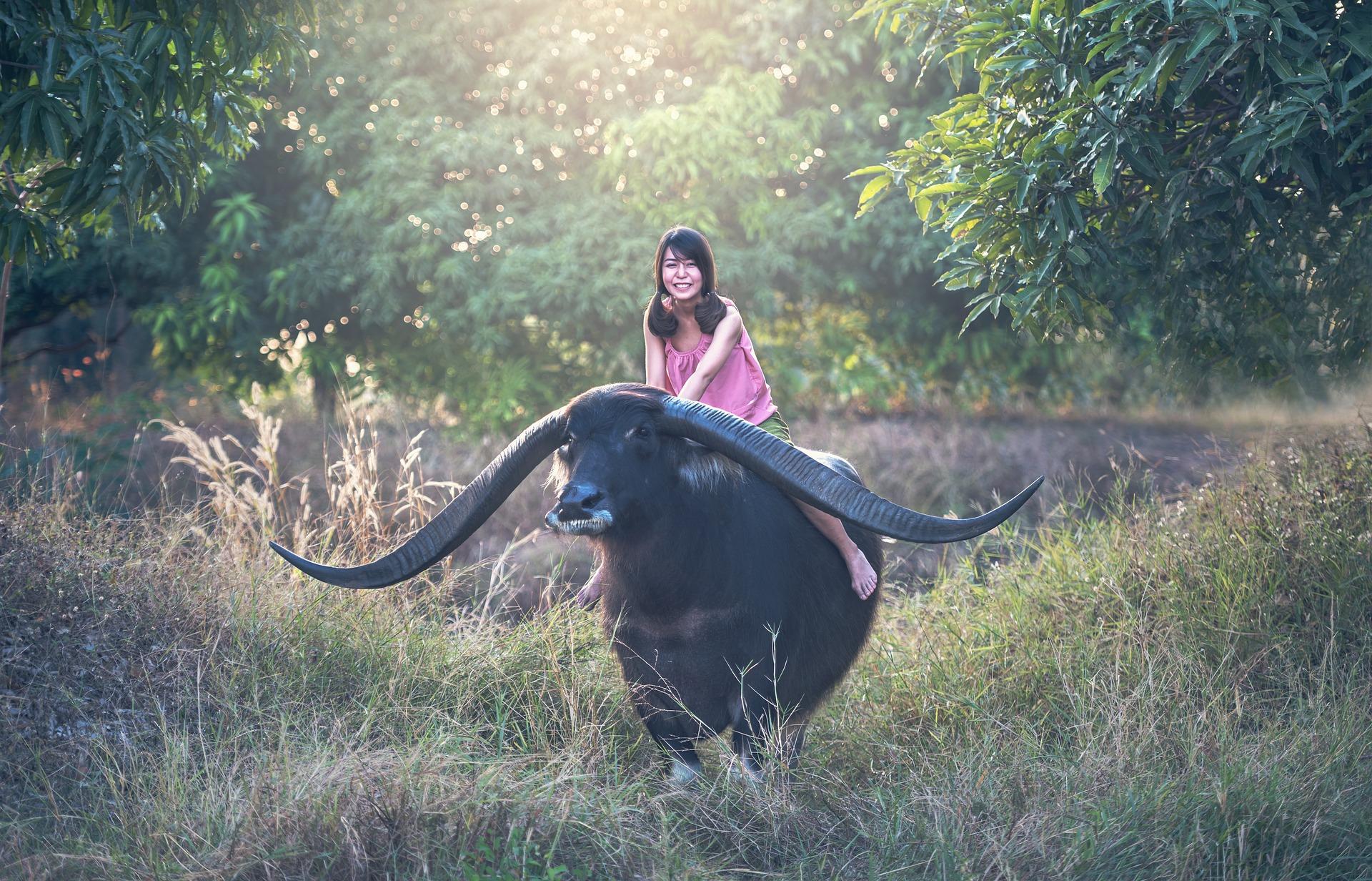 Buffalo Ride, Activity, Animal, Buffalo, Girl, HQ Photo