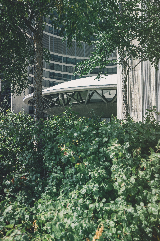 Building, Plant, Tree, Green, Architecture, HQ Photo