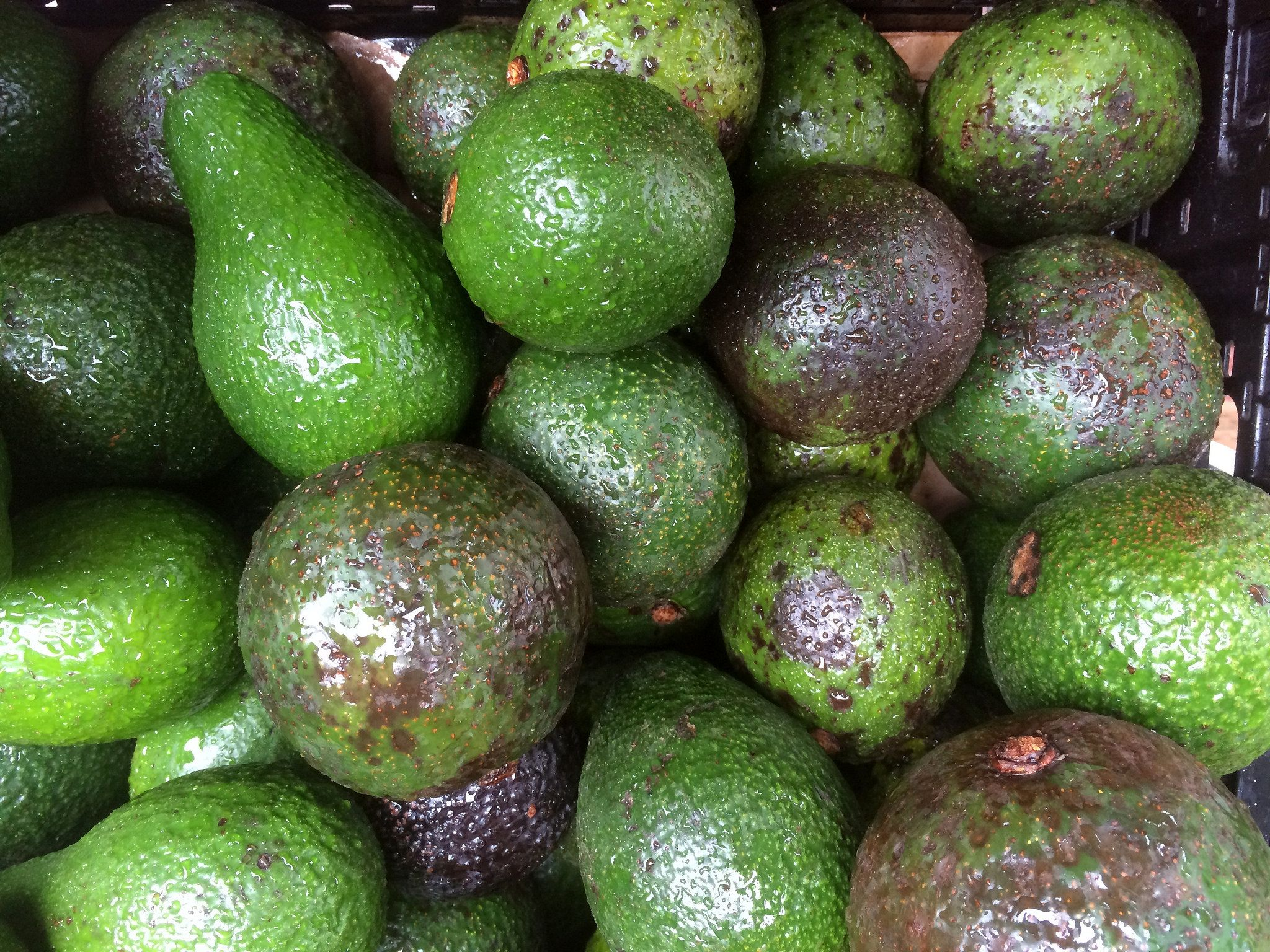 How Hungry Humans Saved the Avocado | Avocado guacamole, Sprouts and ...