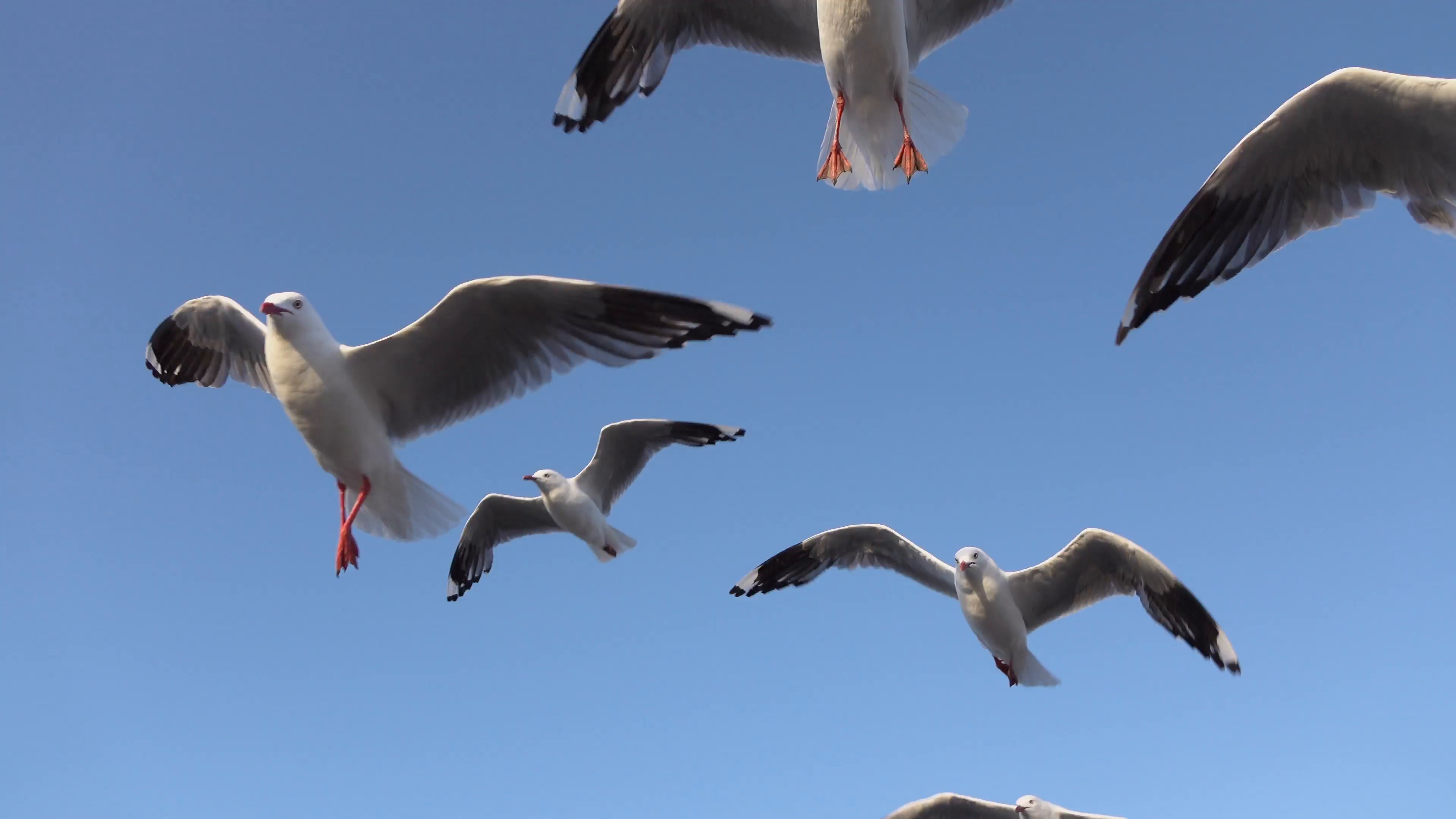 Bunch of seagulls photo