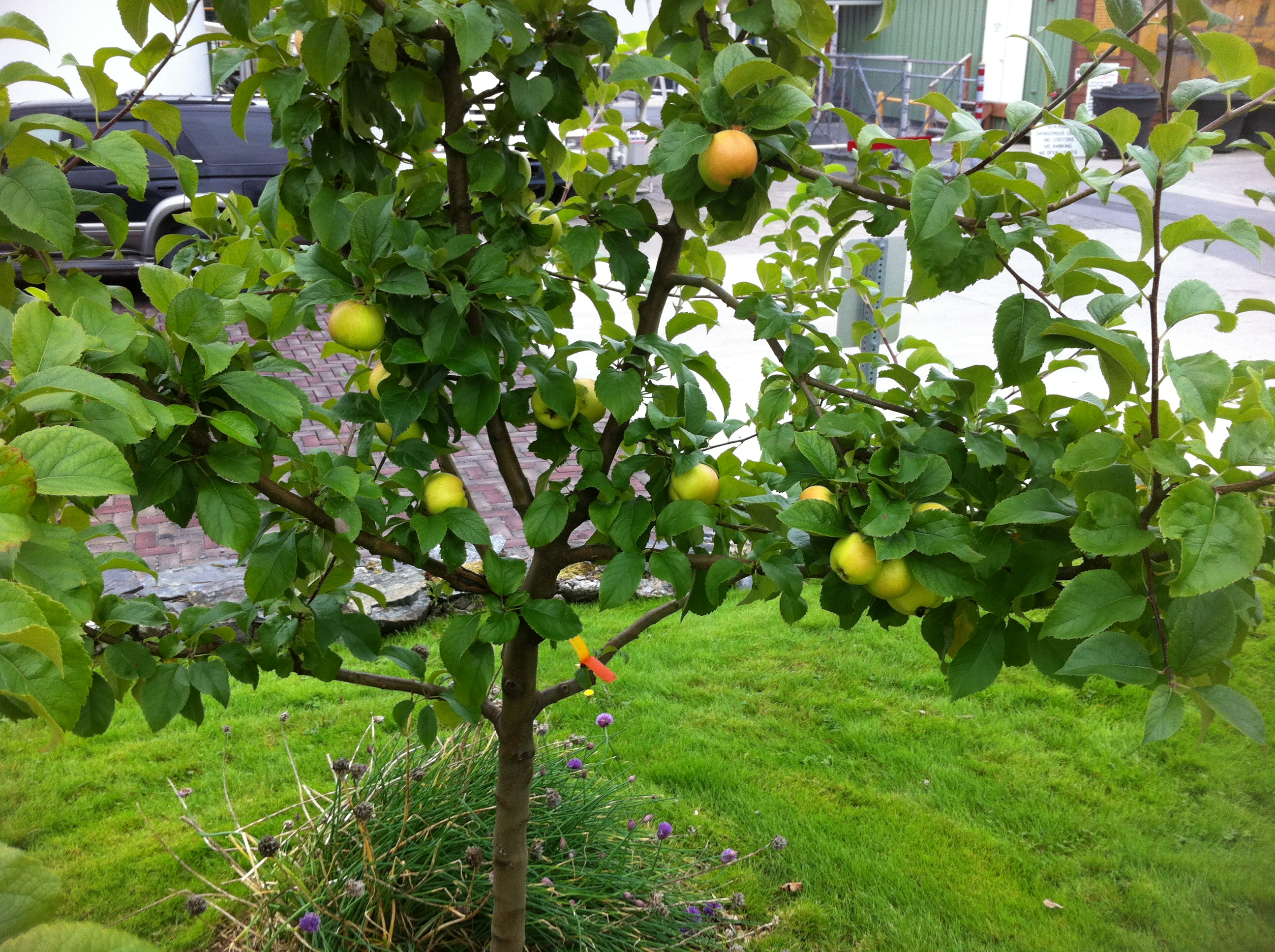 crabapples – Sitka Local Foods Network