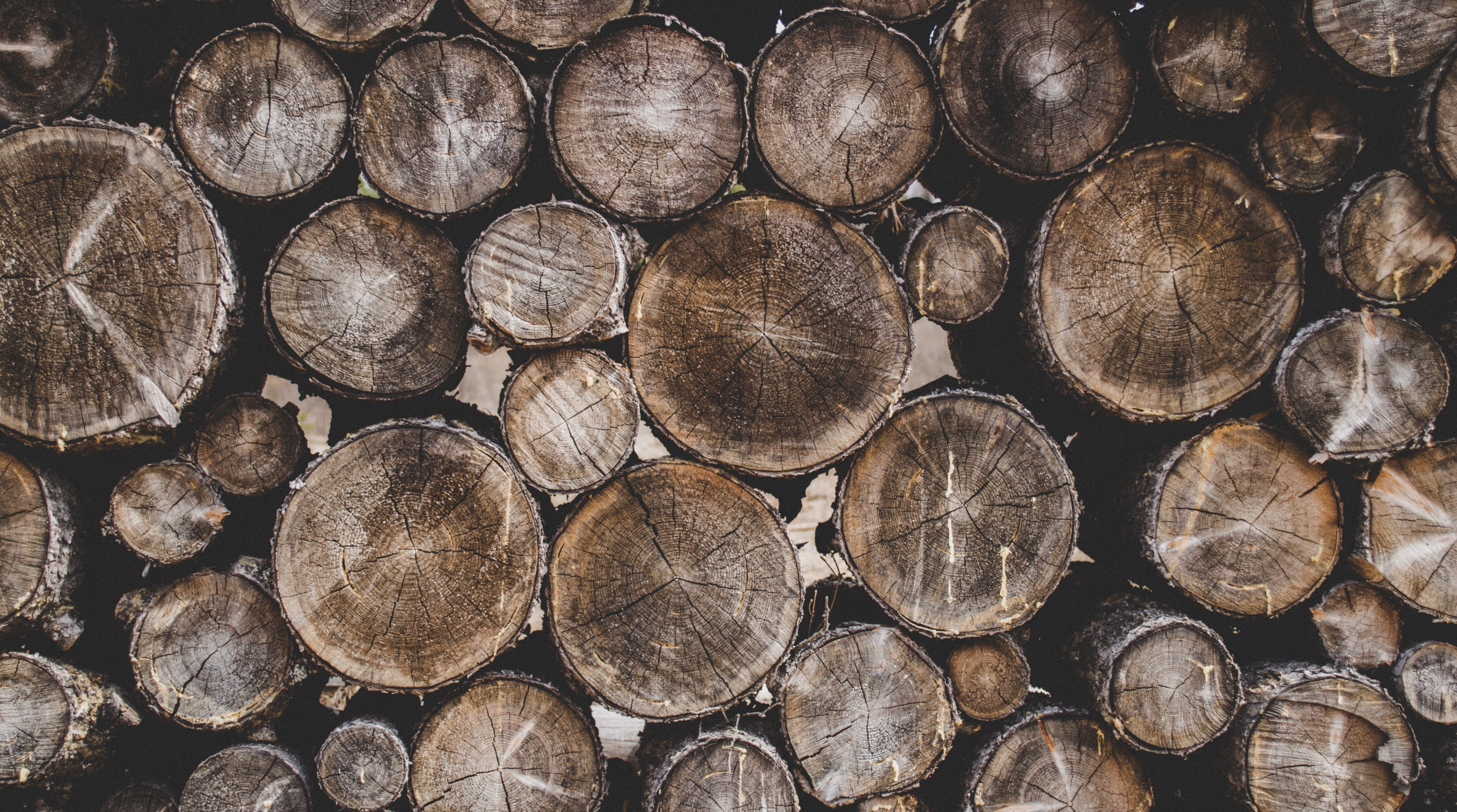 Bunch of Wood Stumps, Background, Stack, Wooden logs, Wooden, HQ Photo