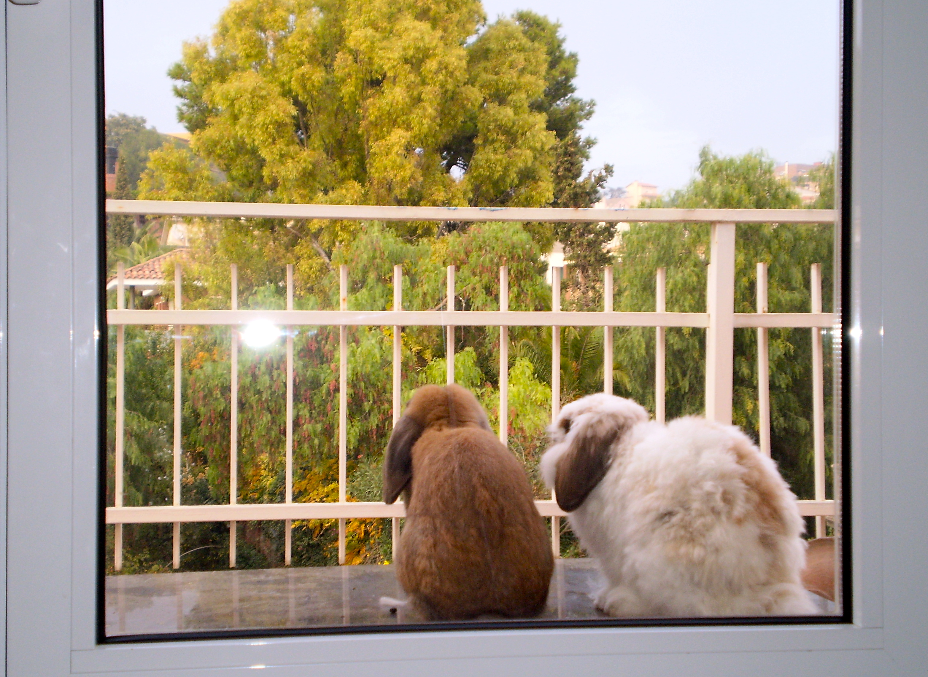 Bunnies day dreaming.... photo