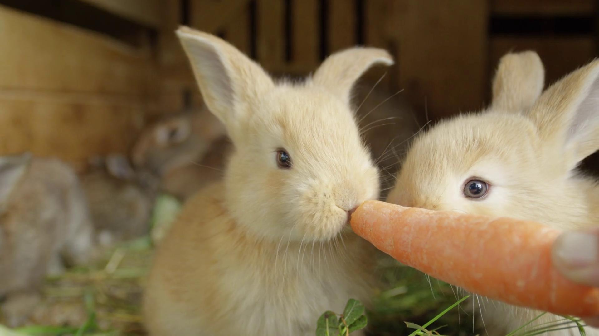 Easter rabbits closeup photo