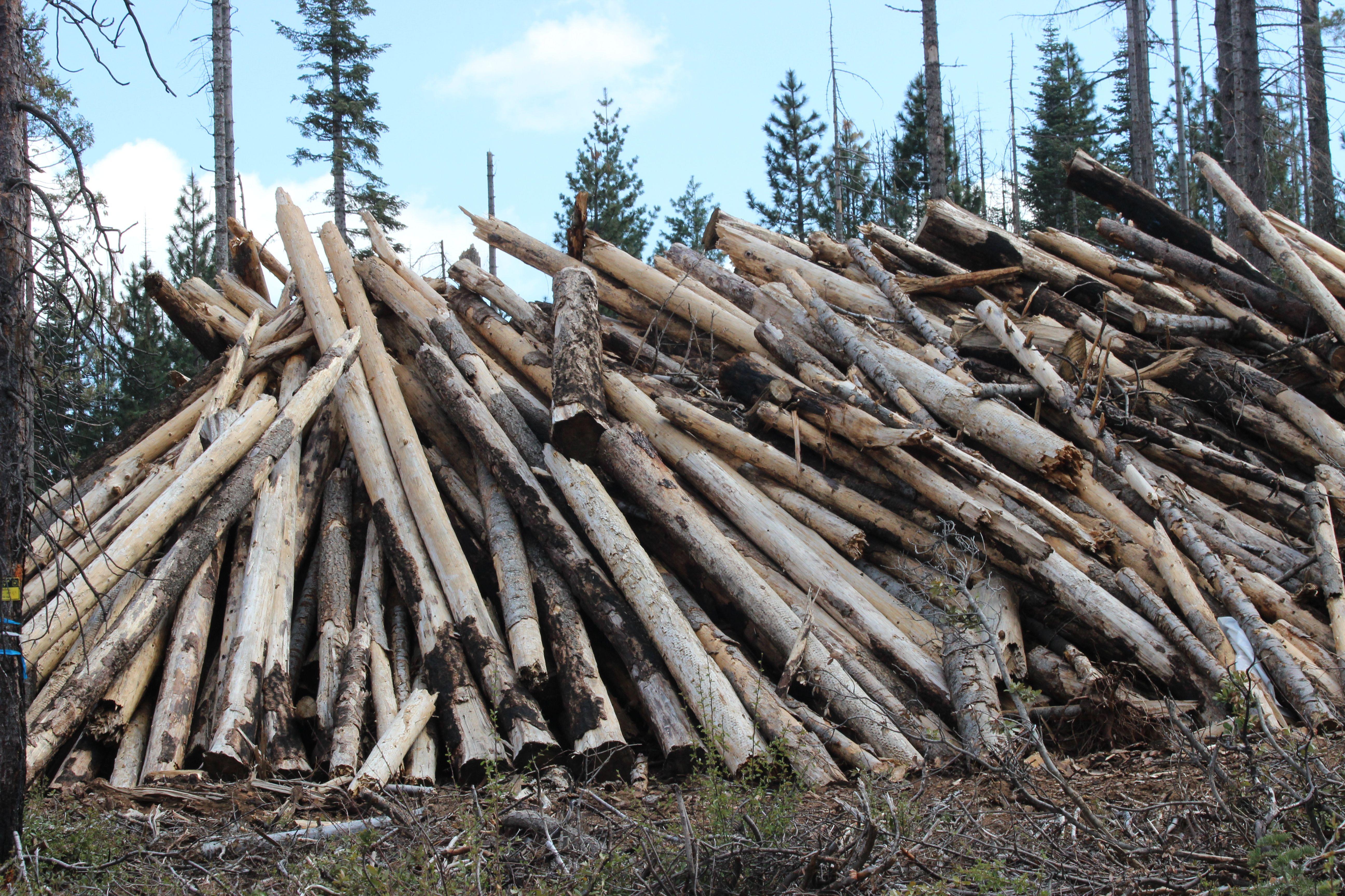 Harvesting the burned trees/logs   Scenic getaways   Pinterest