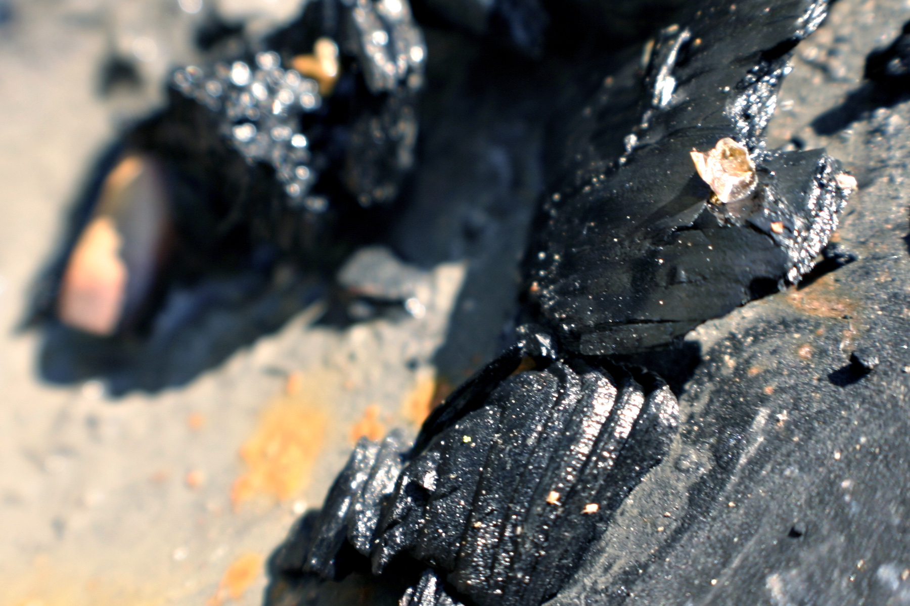 Burned wood, Black, Focus, Texture, Tree, HQ Photo