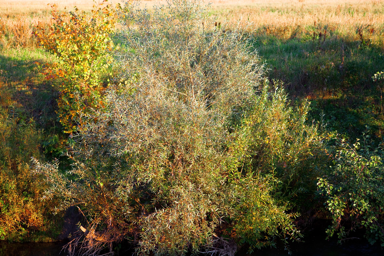 Bush, Green, Nature, Outside, Plants, HQ Photo