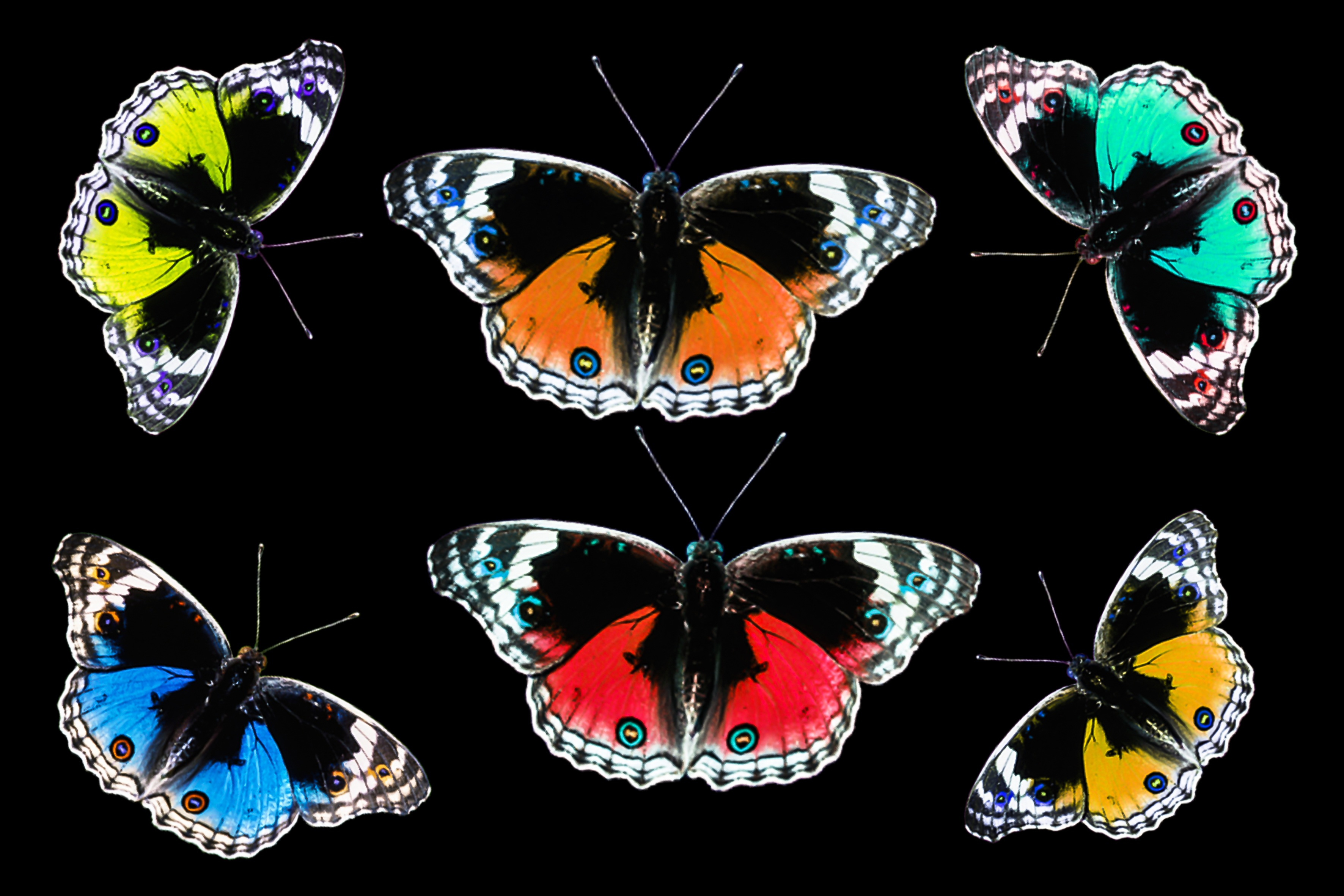 Butterflies on paper photo