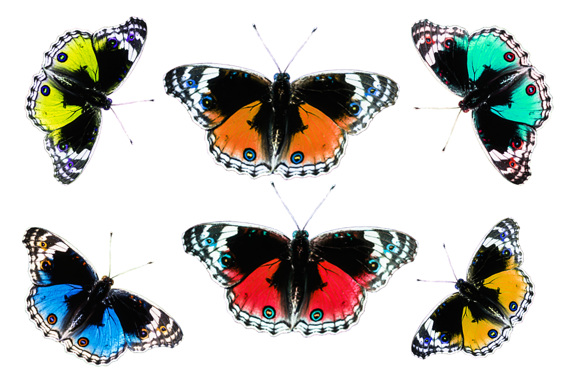 Butterflies on paper photo