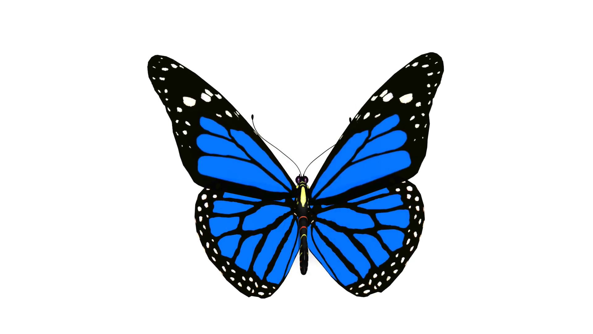 Butterfly monarch orange butterfly animation loop Motion Background ...