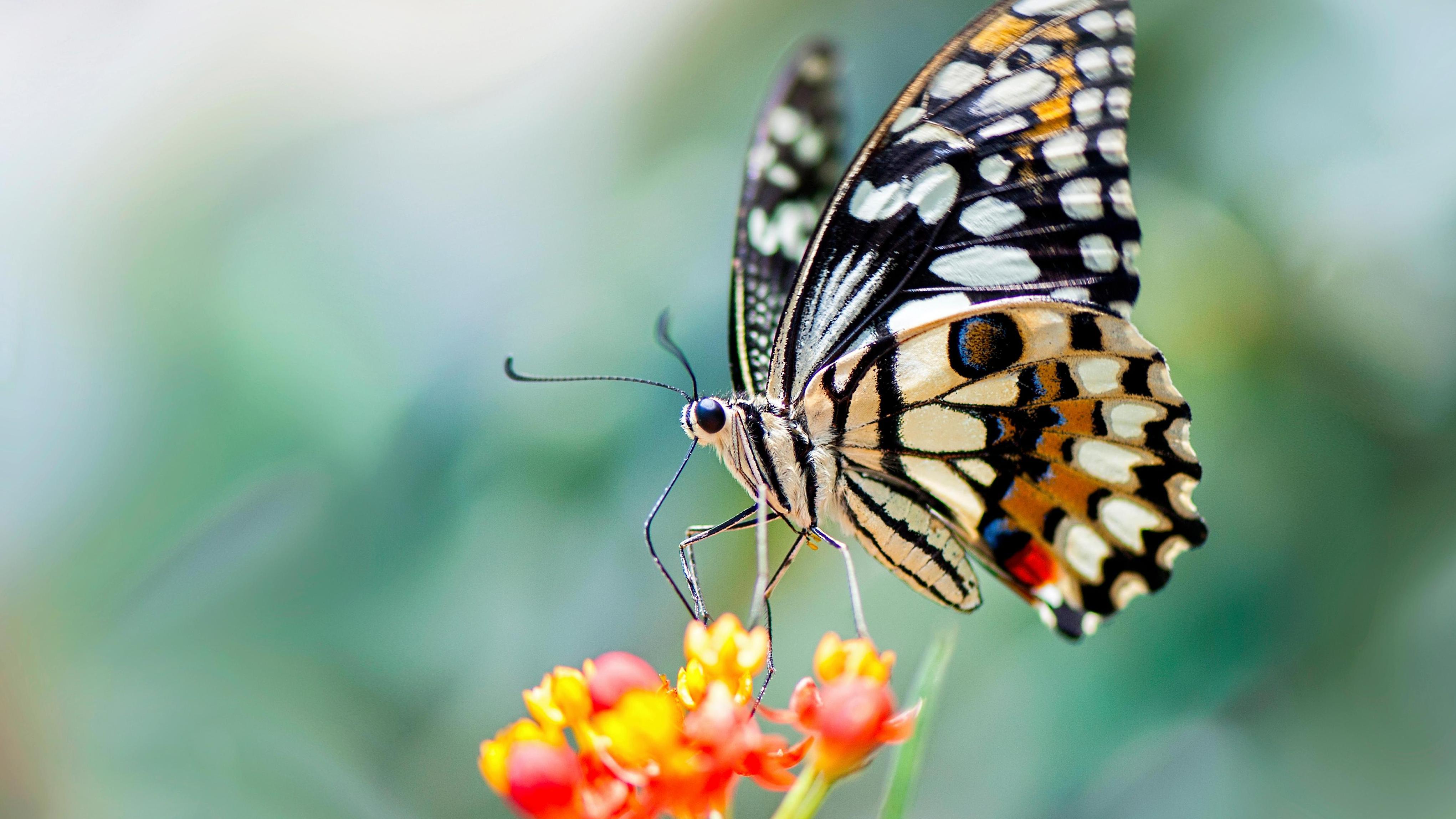 Review: The Killing of Butterfly Joe by Rhidian Brook — a flighty ...
