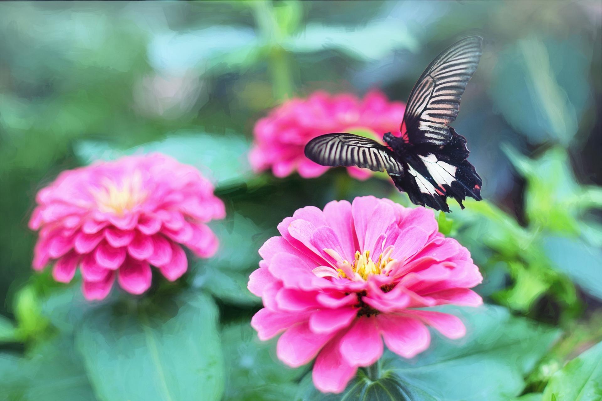 Butterfly in the garden photo