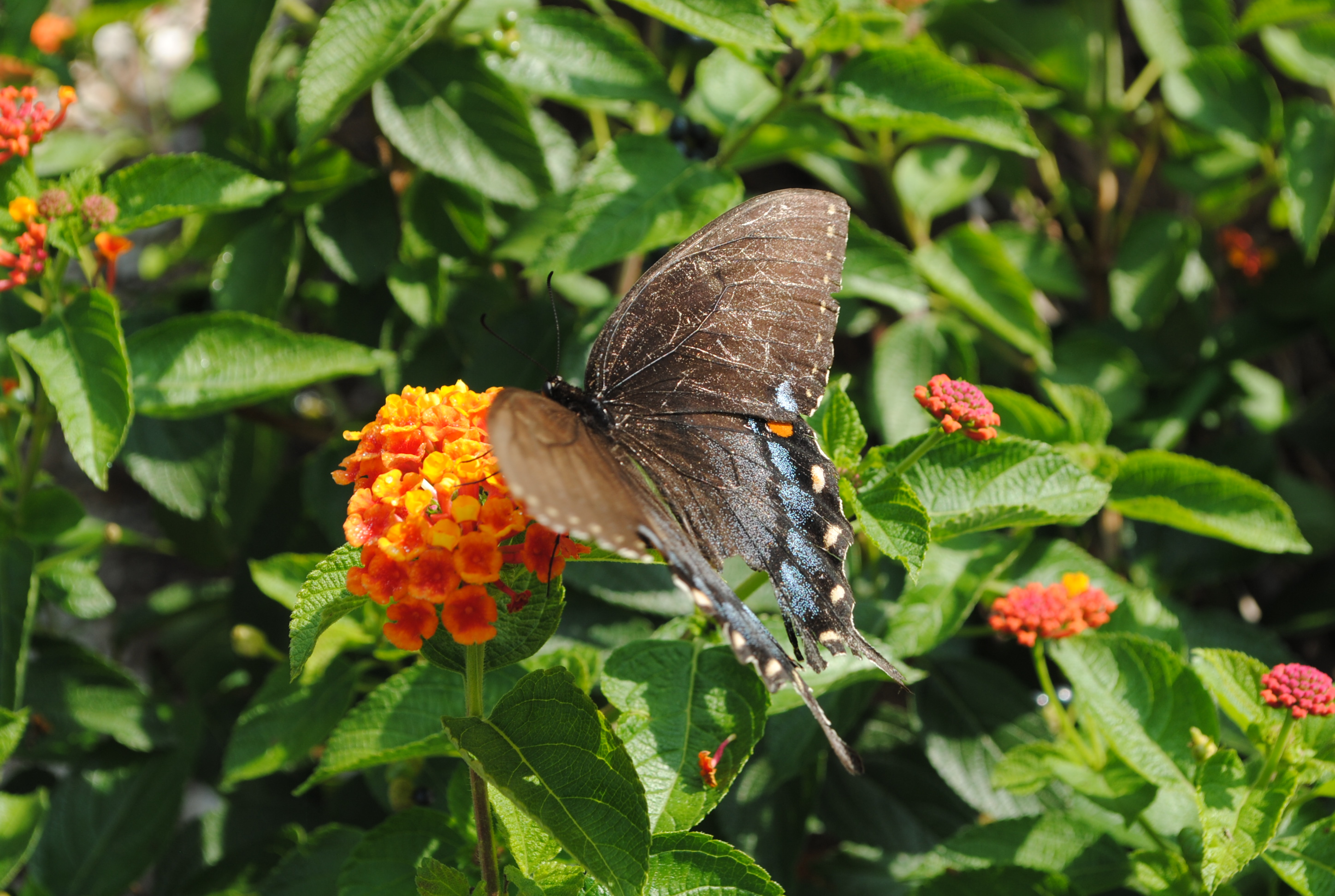 Butterfly in the Garden, Animal, Blooming, Butterfly, Flower, HQ Photo