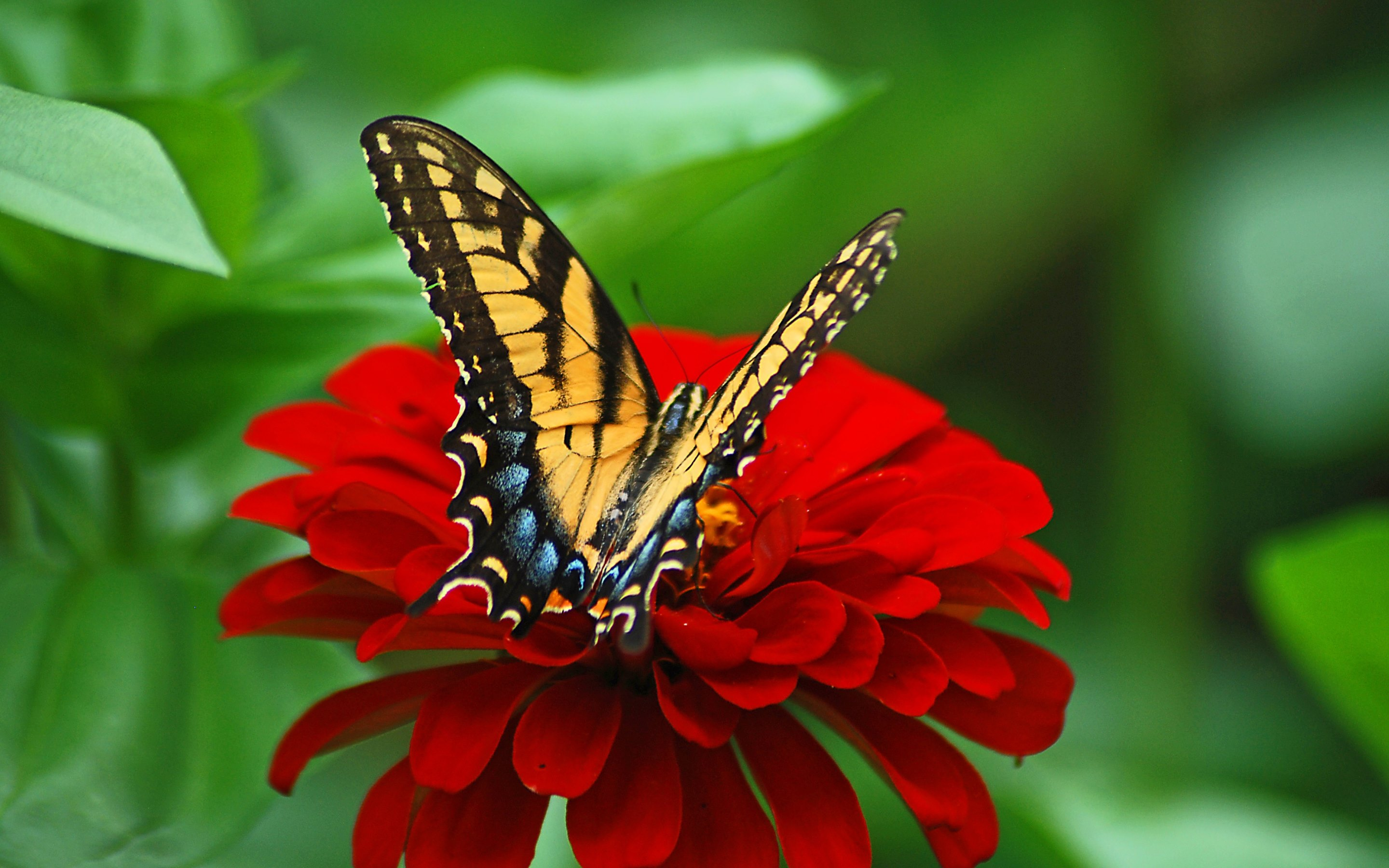 free photo: butterfly on the flower - insect, macro, nature