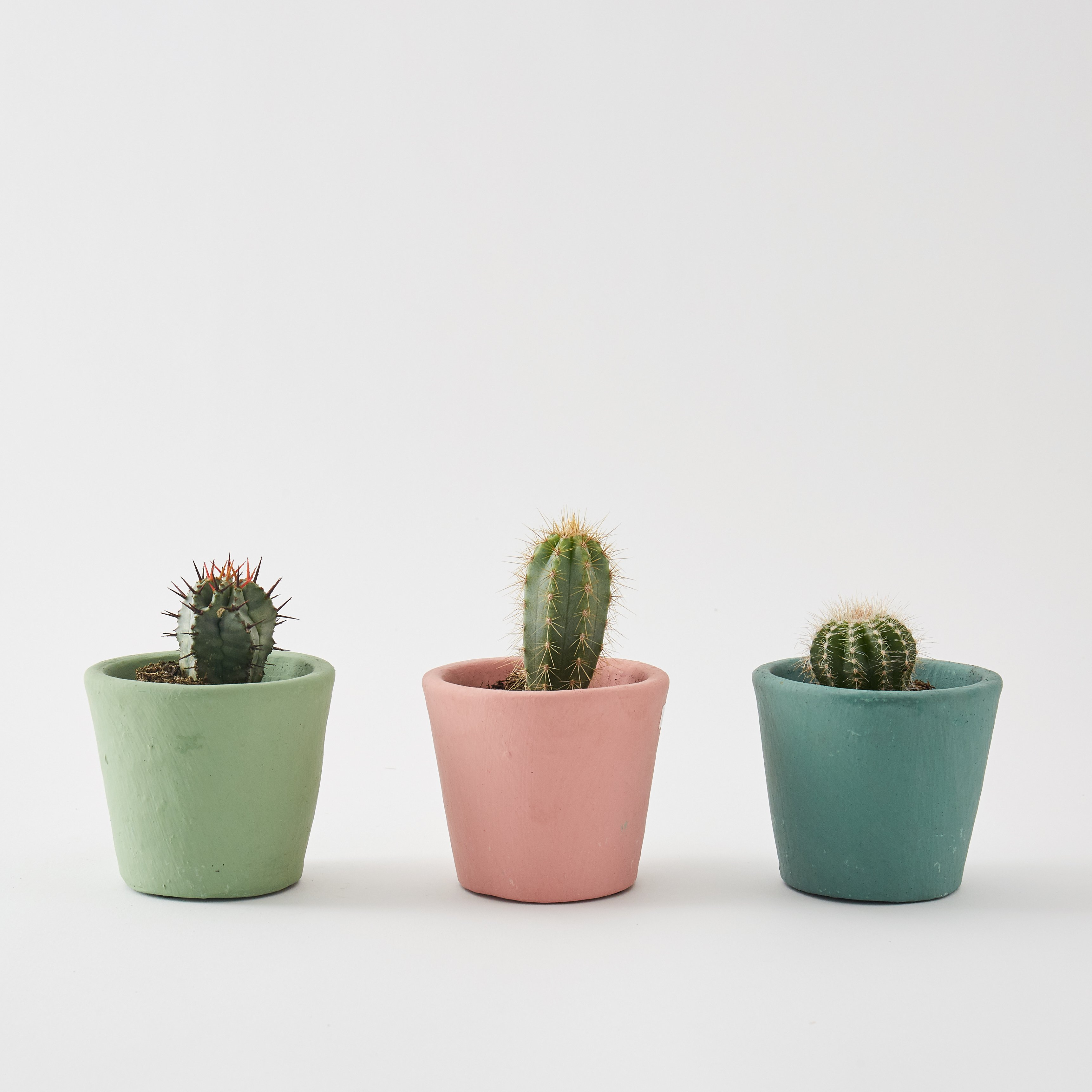 Cacti photo