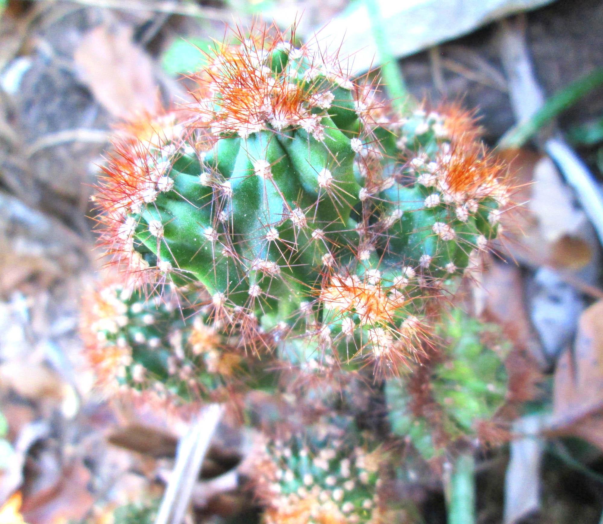 Cactus, Saguaro, West, Usa, Tree, HQ Photo