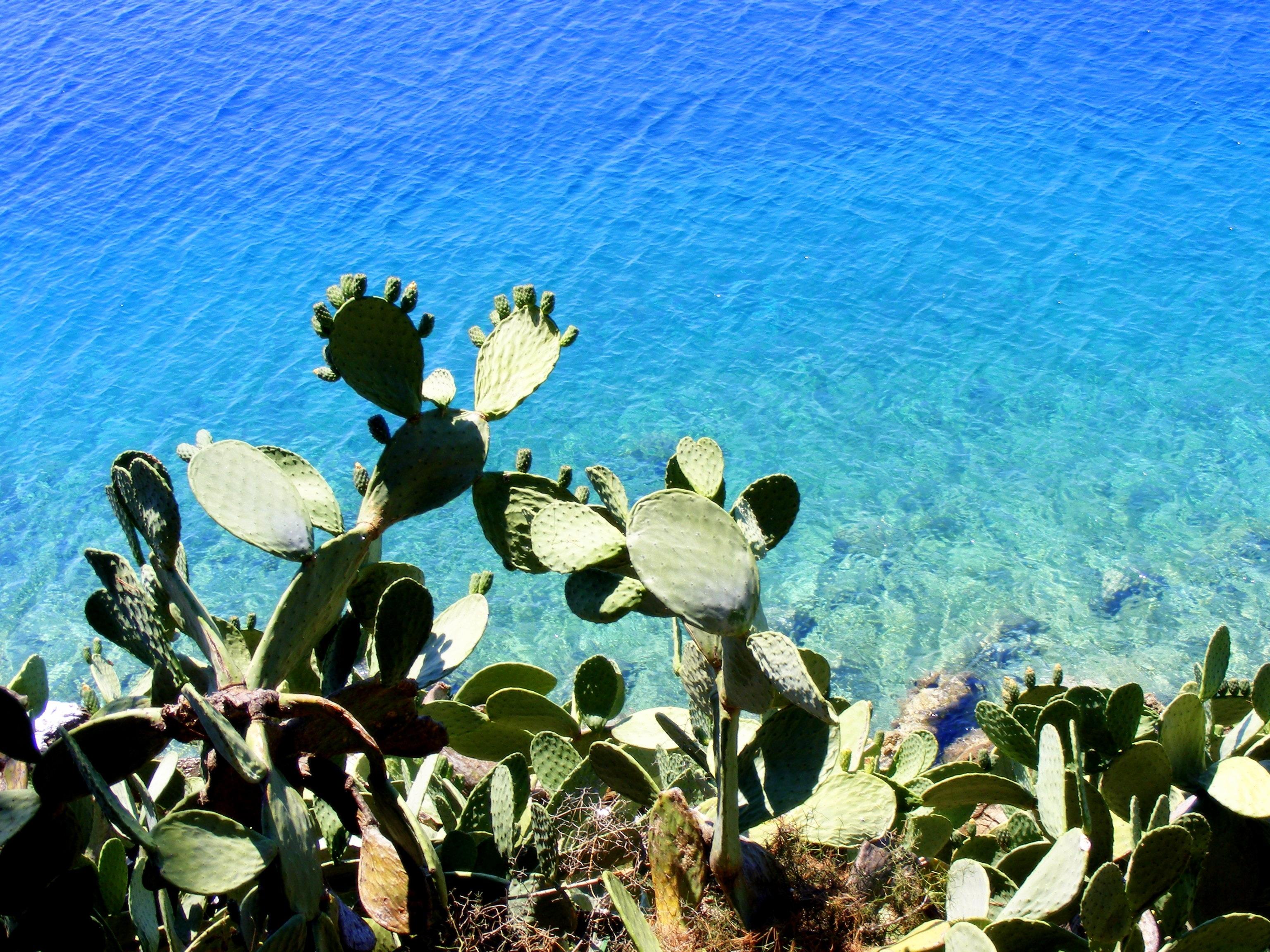 Cactus on the Shore, Blue, Cactus, Flow, Green, HQ Photo