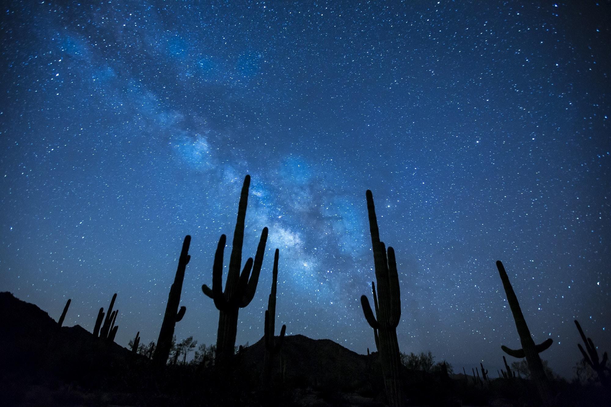 Cactus plants under the starry sky photo