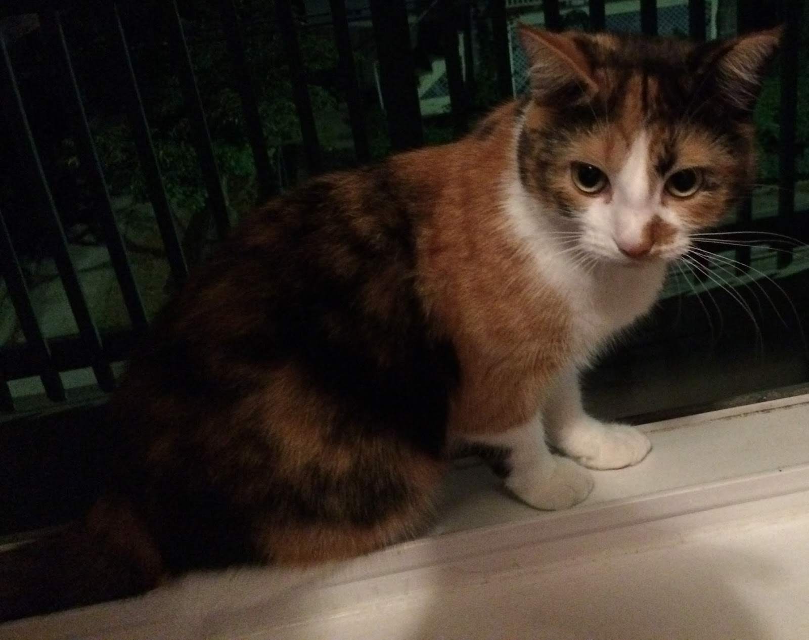Science Types: The genetics of the calico cat