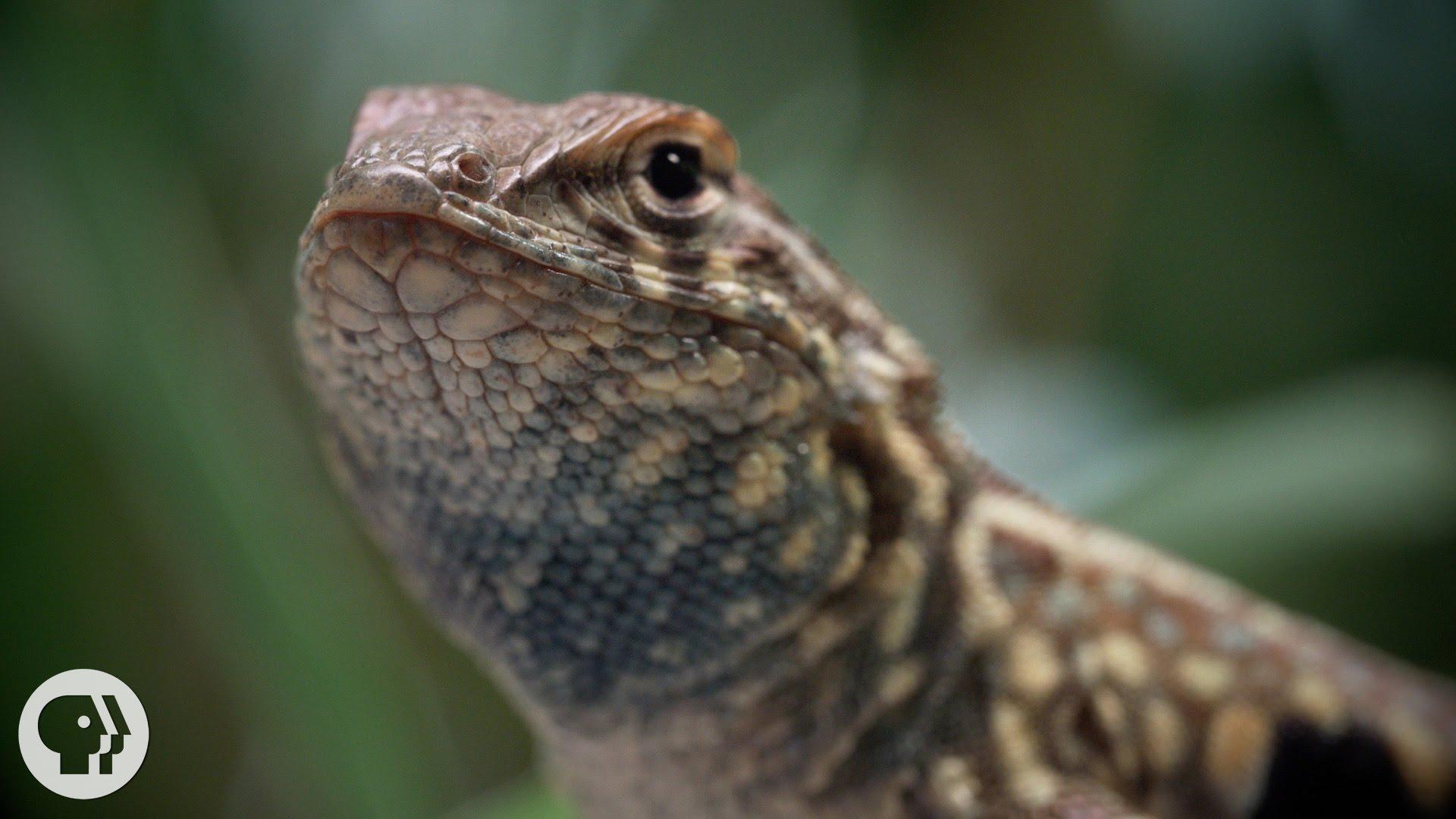 Lizard photo