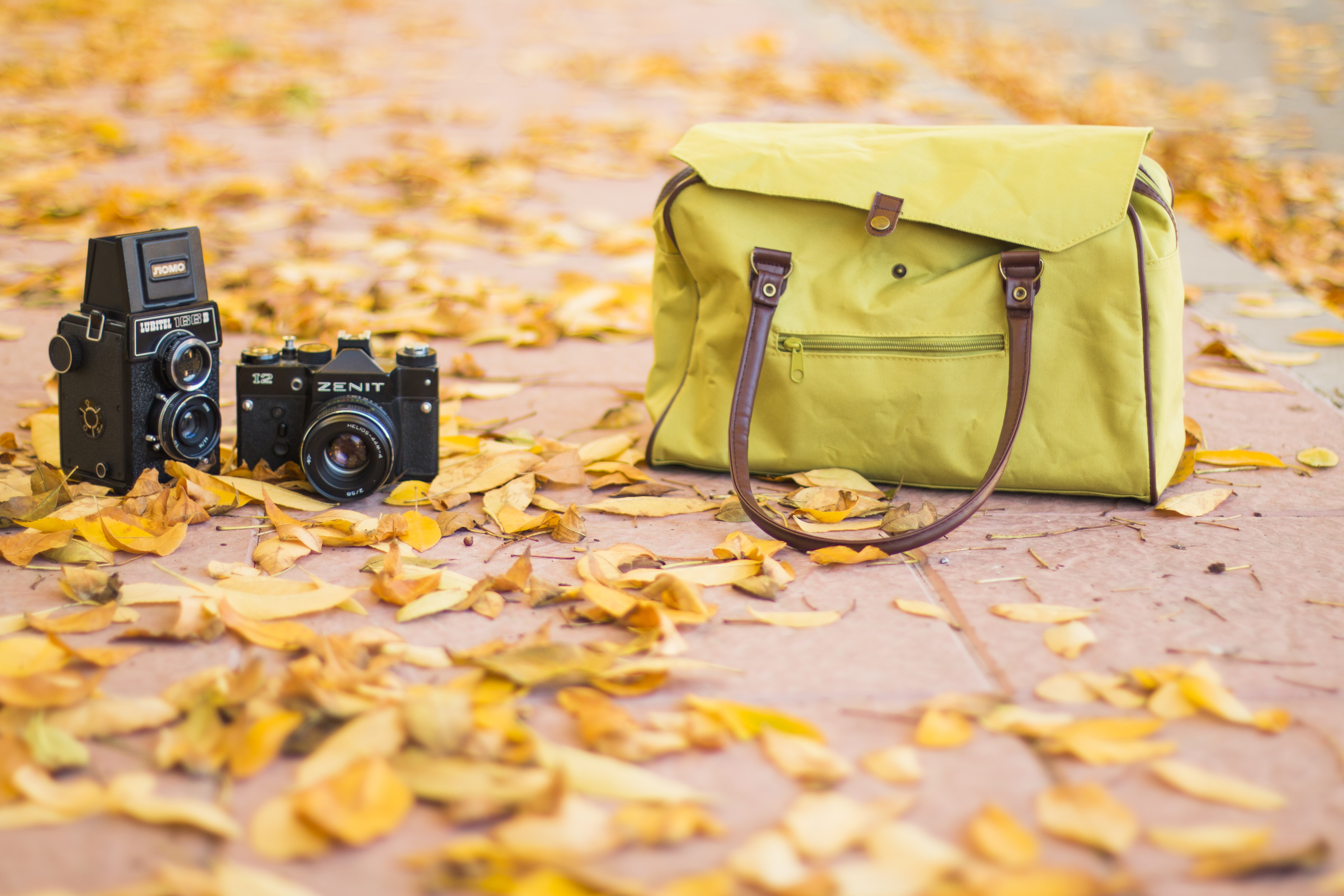 Cameras and autumn leaves photo