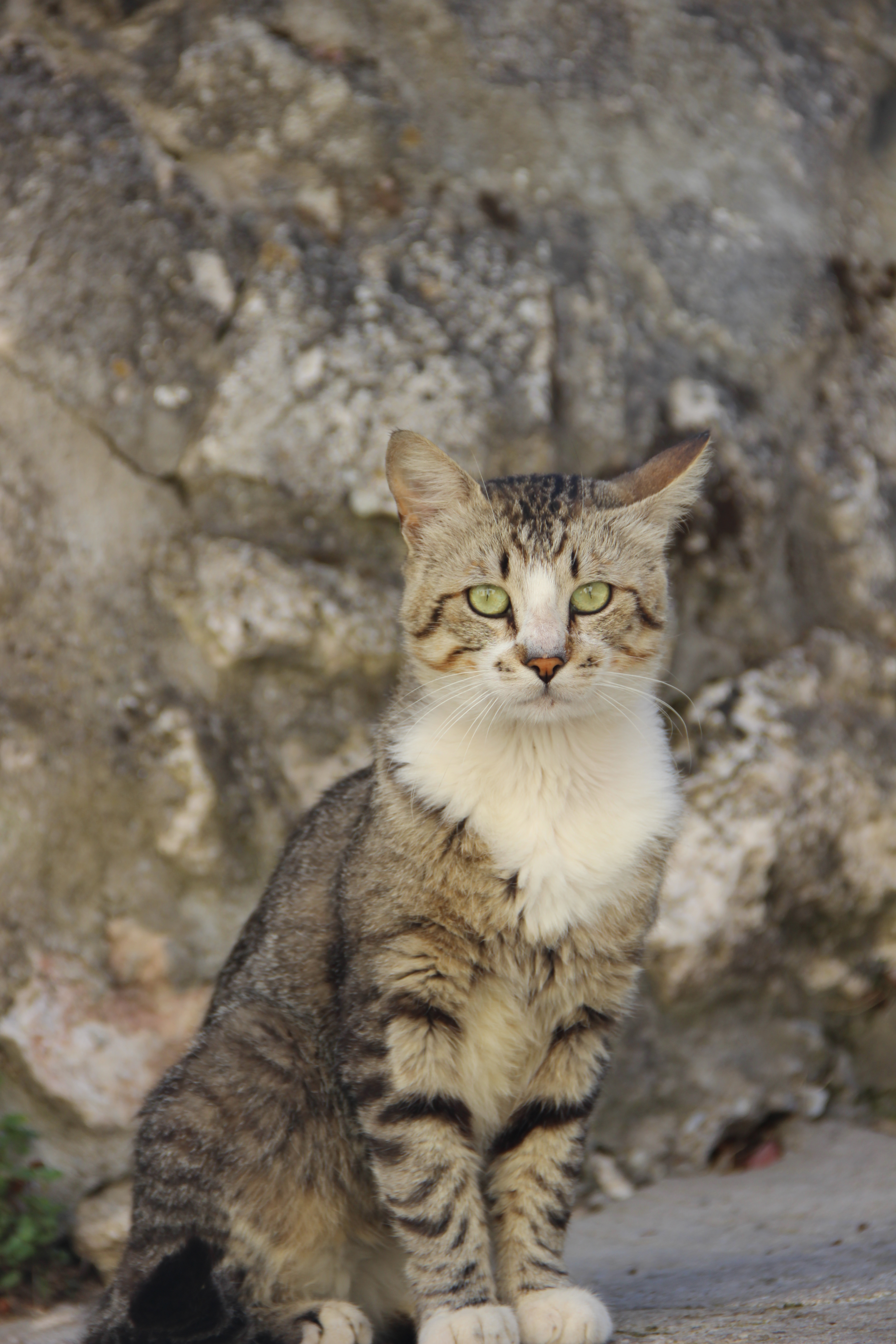 CAMILLE MORENOS - Chat des rues, Animal, Cat, Outdoor, Pet, HQ Photo