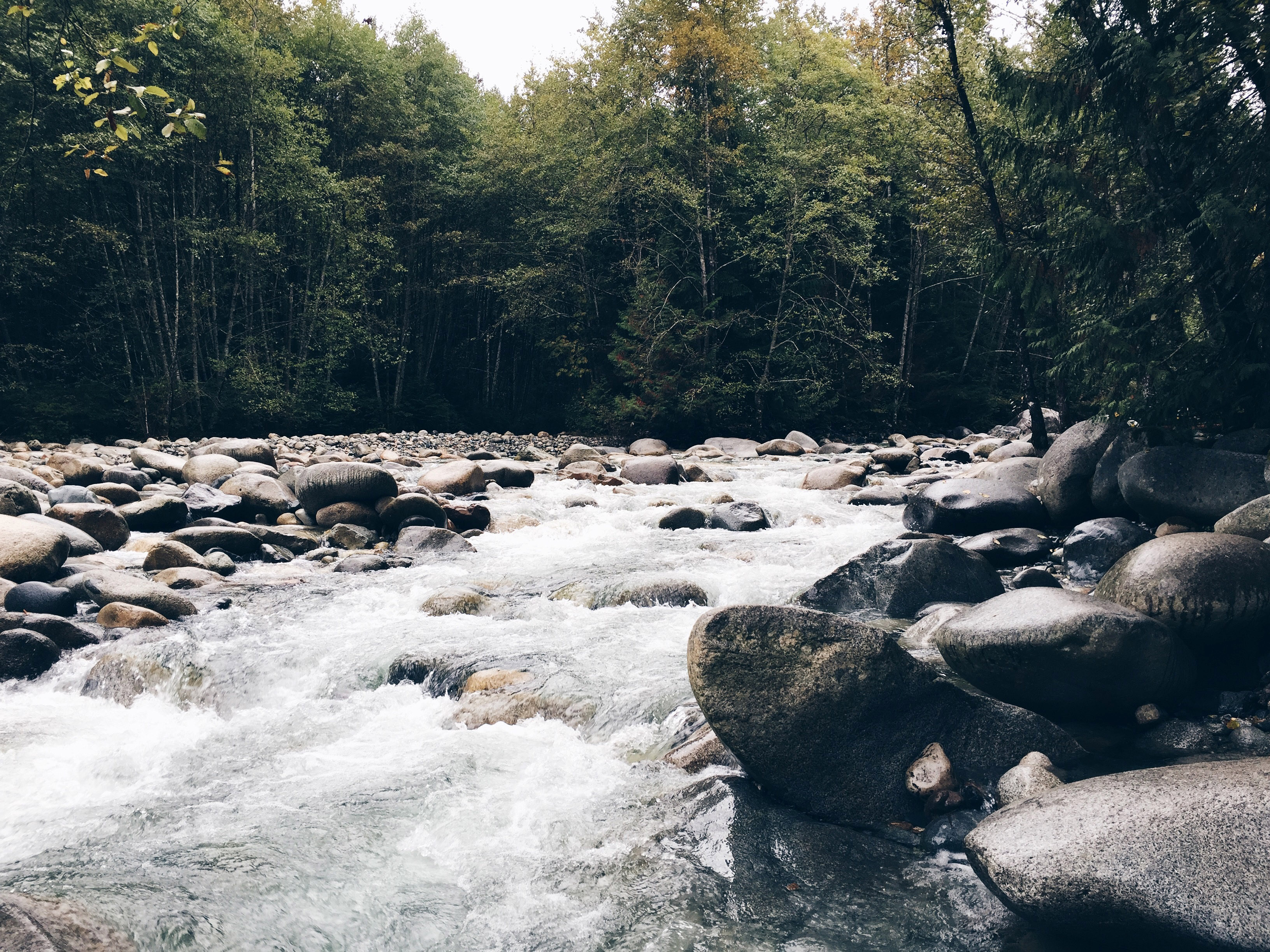 Creek and Rapids at Stanley Park in Vancouver, British Columbia ...