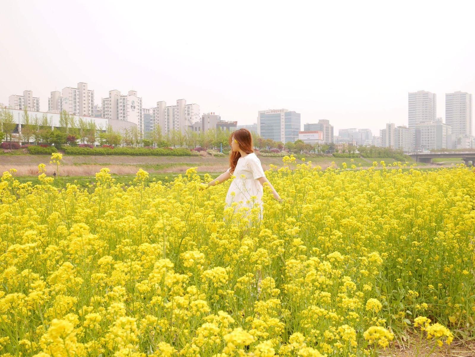 EAT.TRAVEL.REPEAT: [KOREA] CANOLA FIELD, GURO