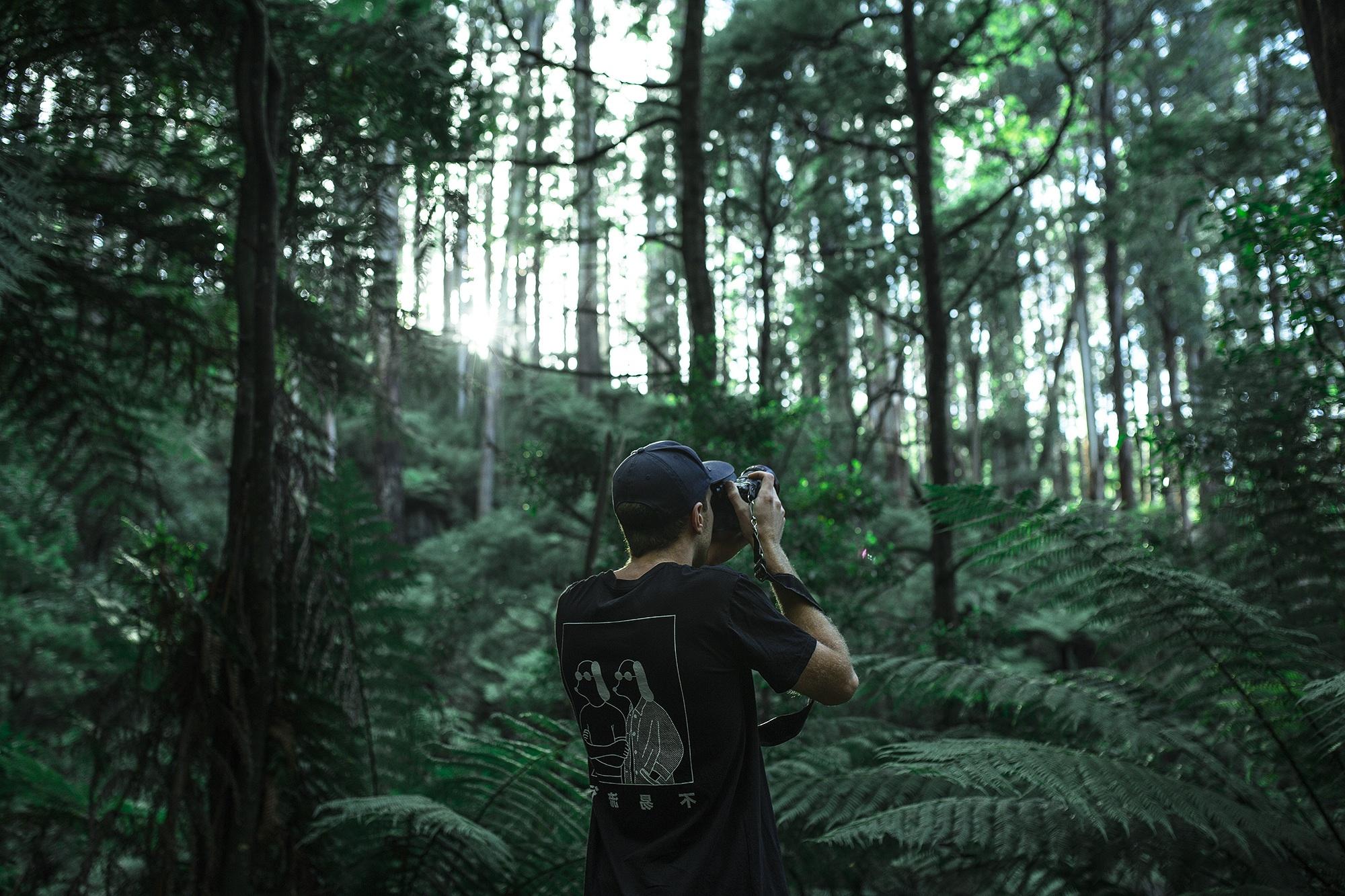 Capturing Nature, professional, tree, wood, woods, HQ Photo