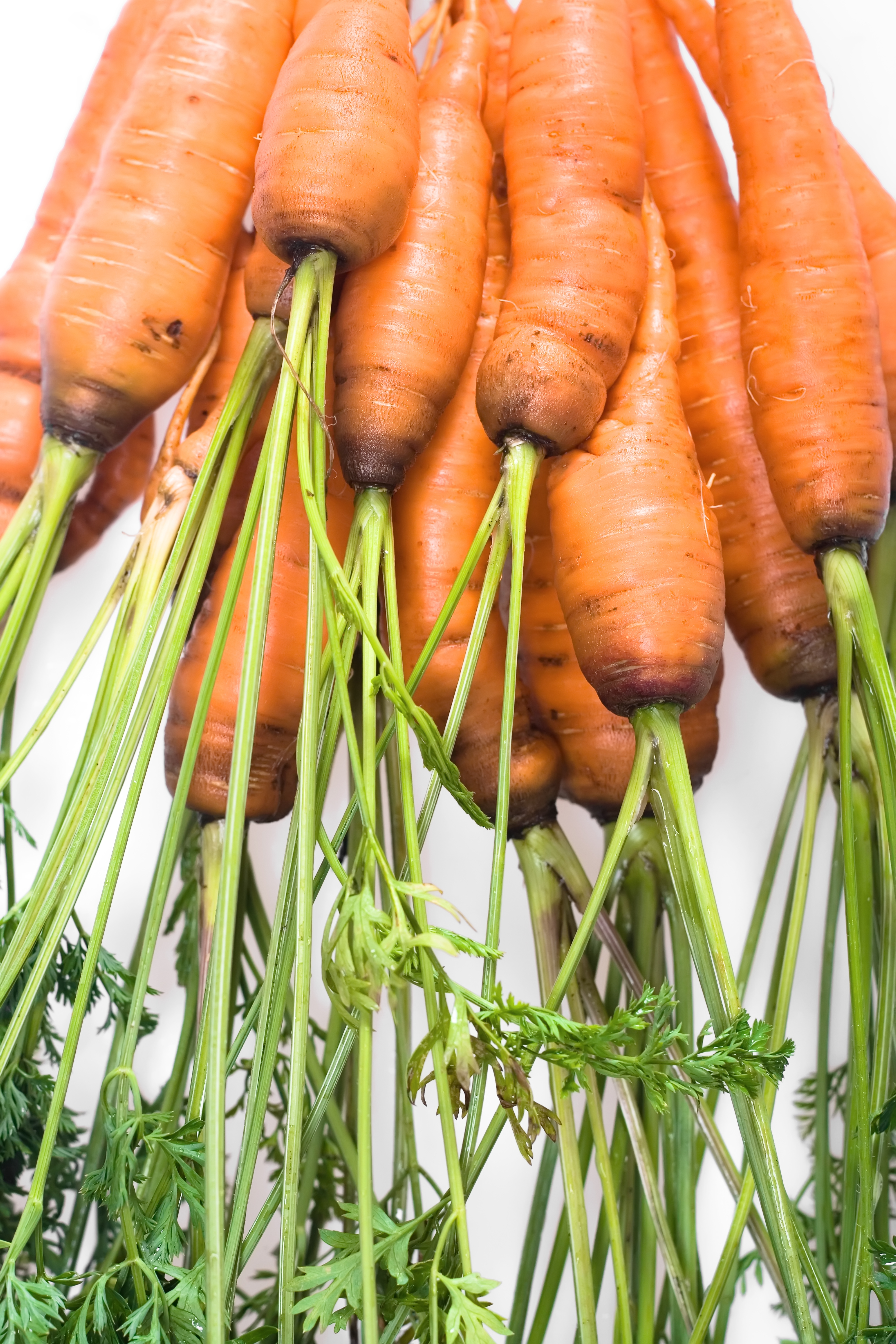carrot, Isolated, Vegetarian, Vegetable, Salad, HQ Photo