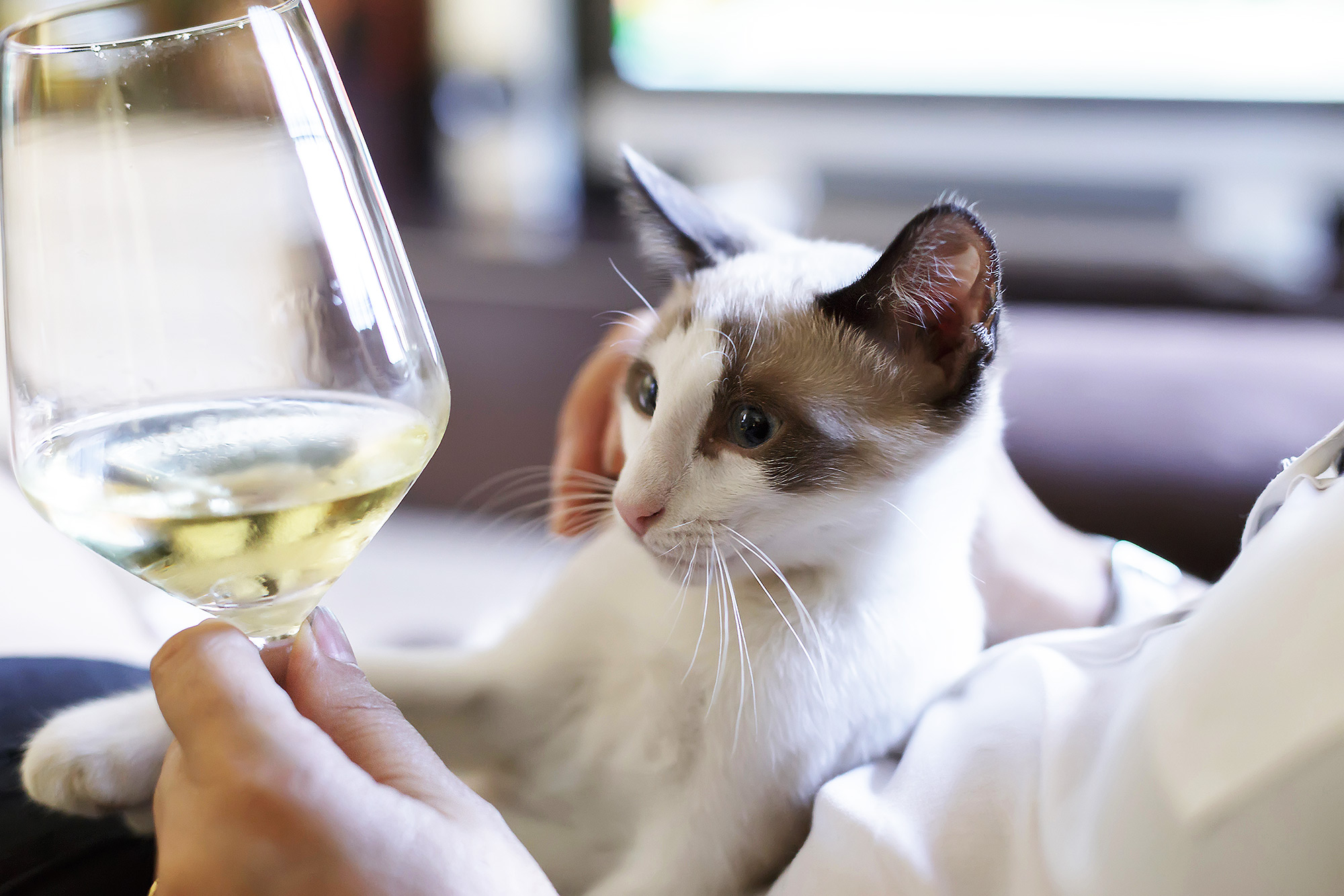 National Drink Wine with Your Cat Week Cat Wines | PEOPLE.com