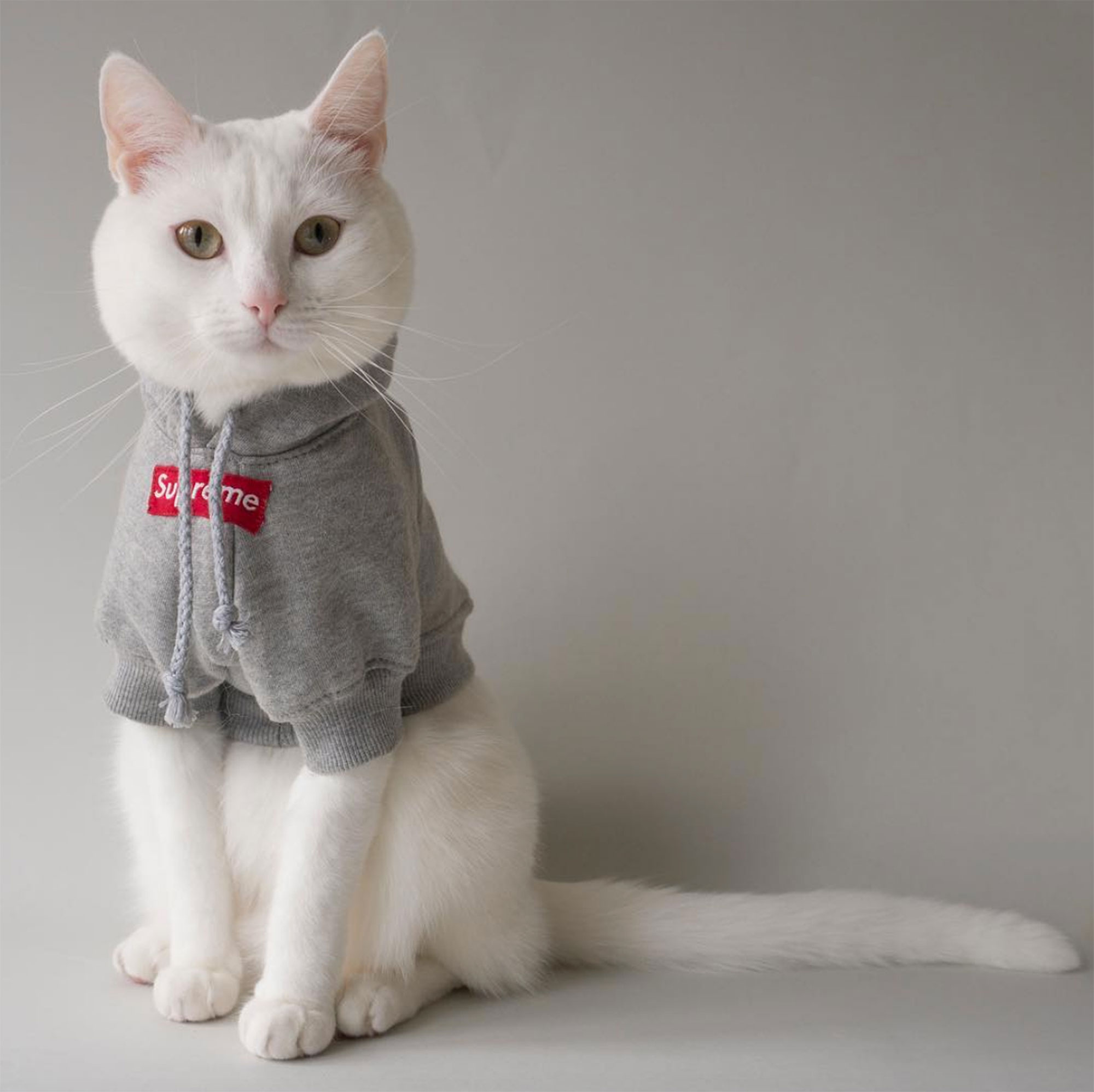 Zappa the Instagram Model Cat Has a Closet of Tiny High Fashion ...