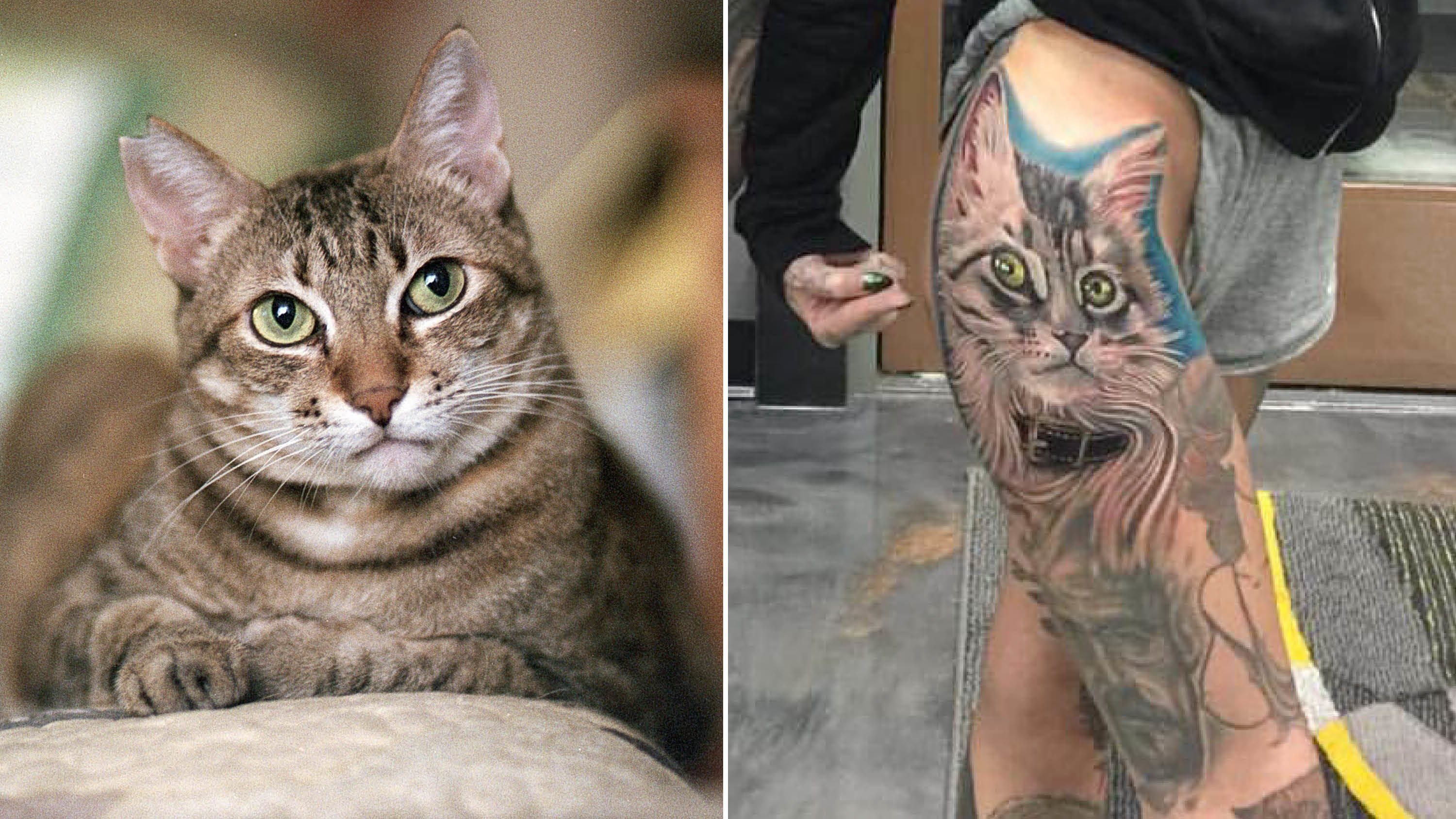 Woman Gets Cat Tattoo With Ink Made From Fur | Allure