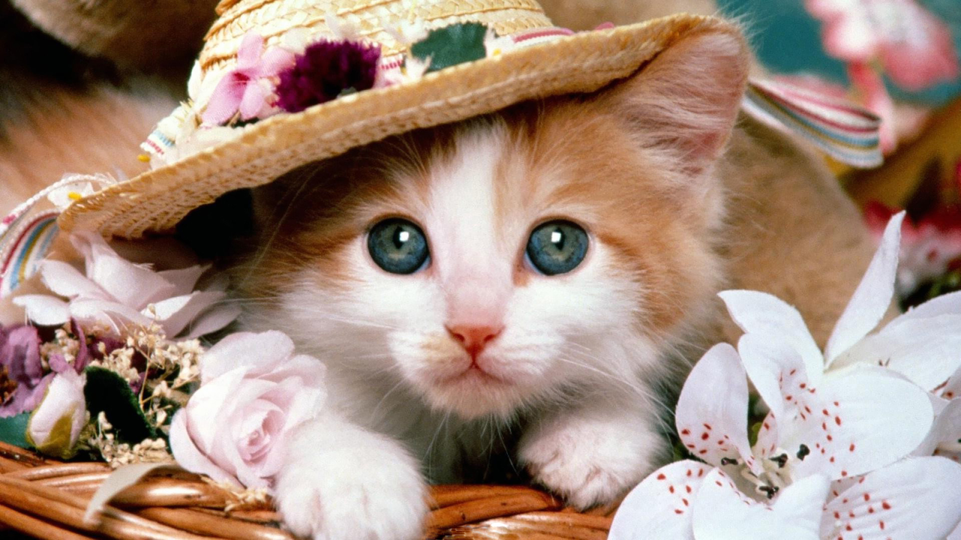 Cat Pictures - All Time Favorite Images of Cats | Pets World