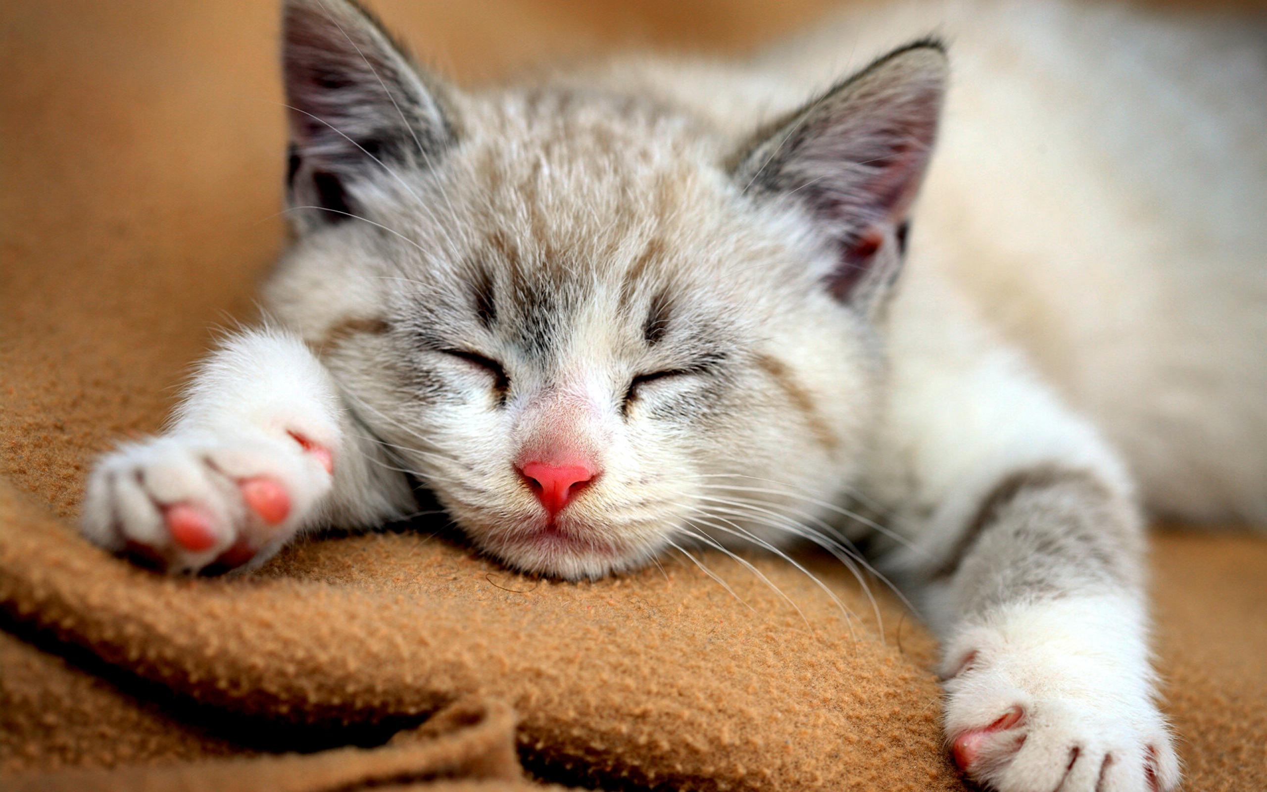 Health Benefits Of Adopting A Cat | ARY ZAUQ Official, Recipes ...