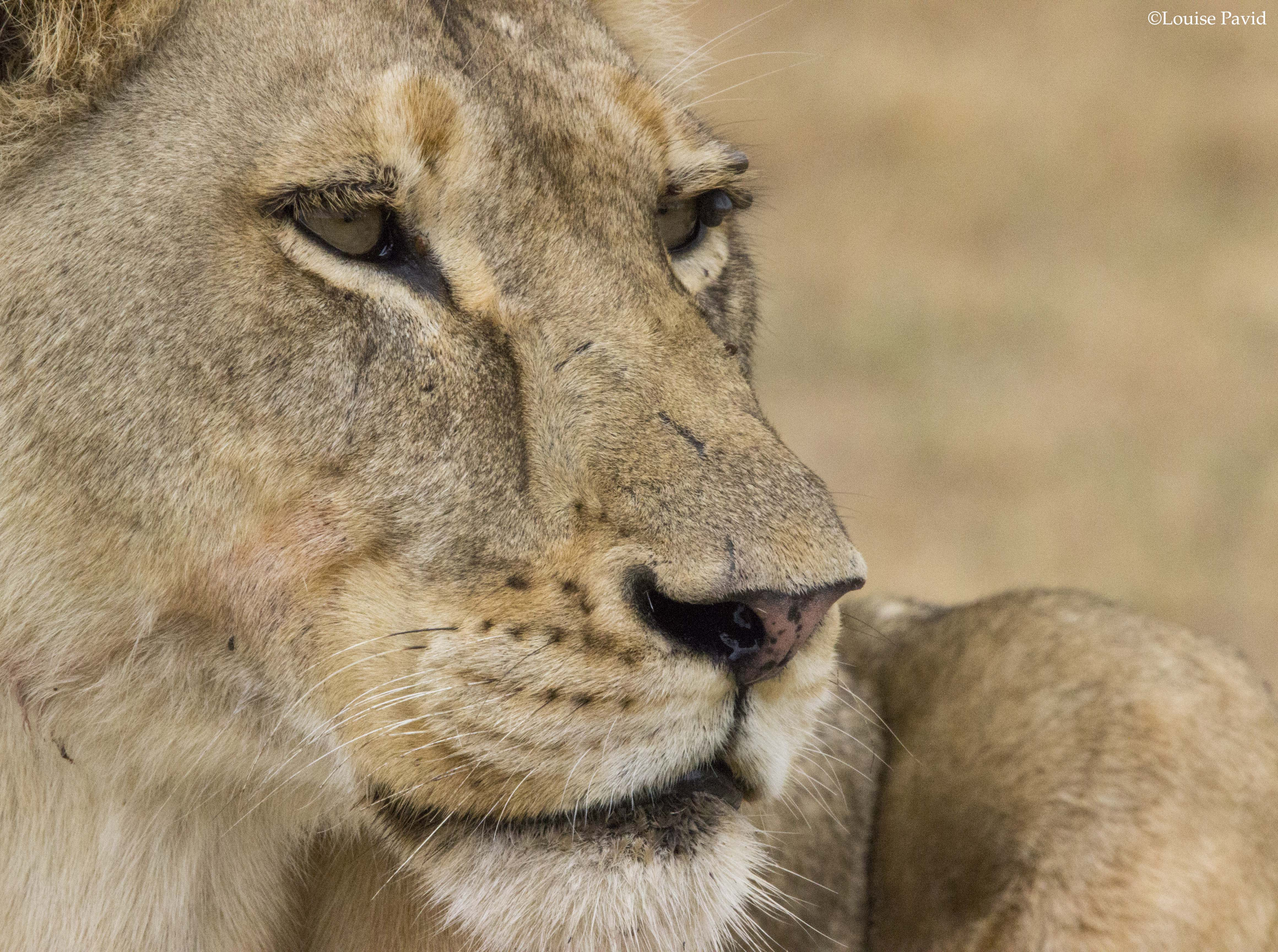 cat-report Archives - WildEarth