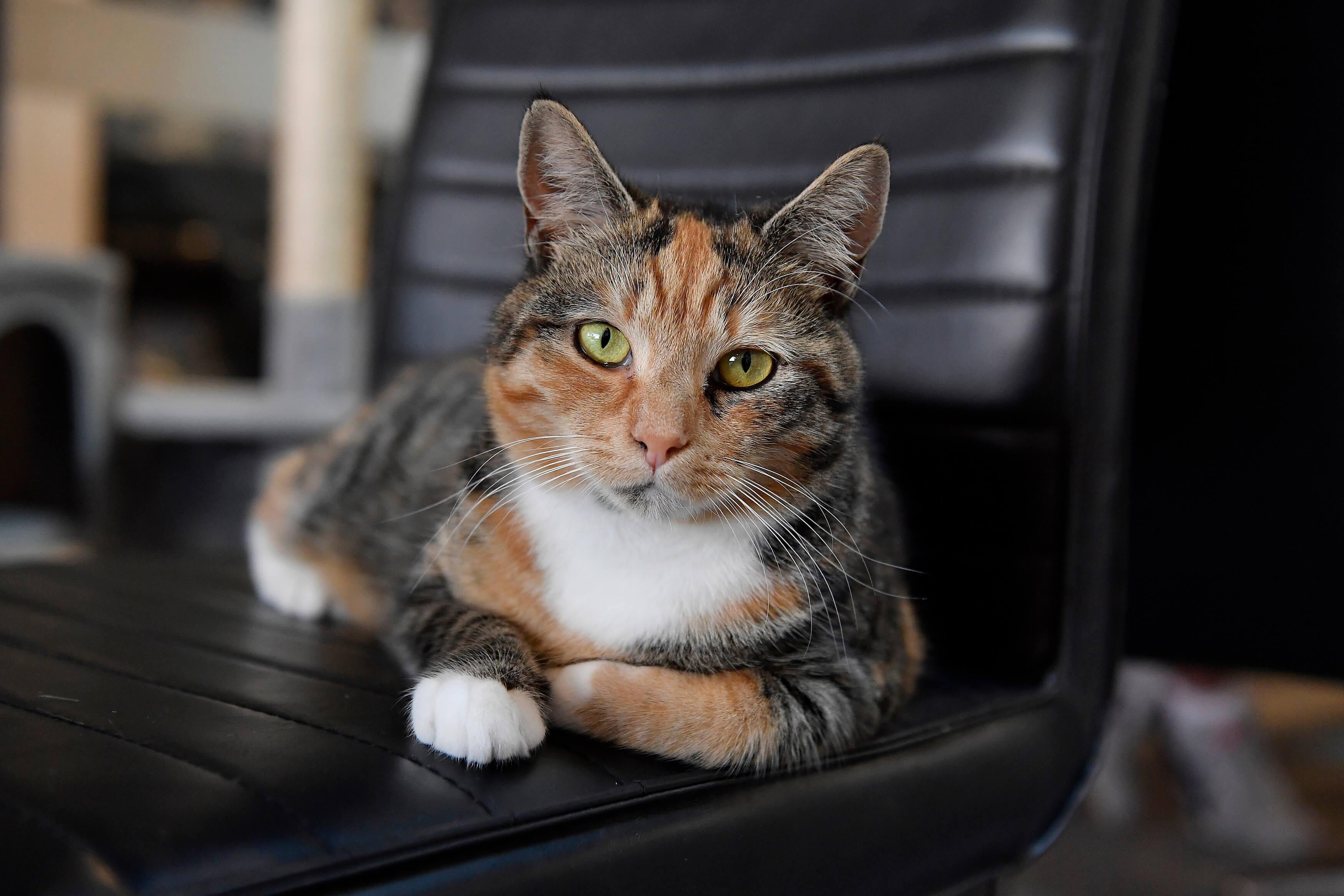 Neko Ngeru Cat Adoption Cafe Lower Hutt Wellington