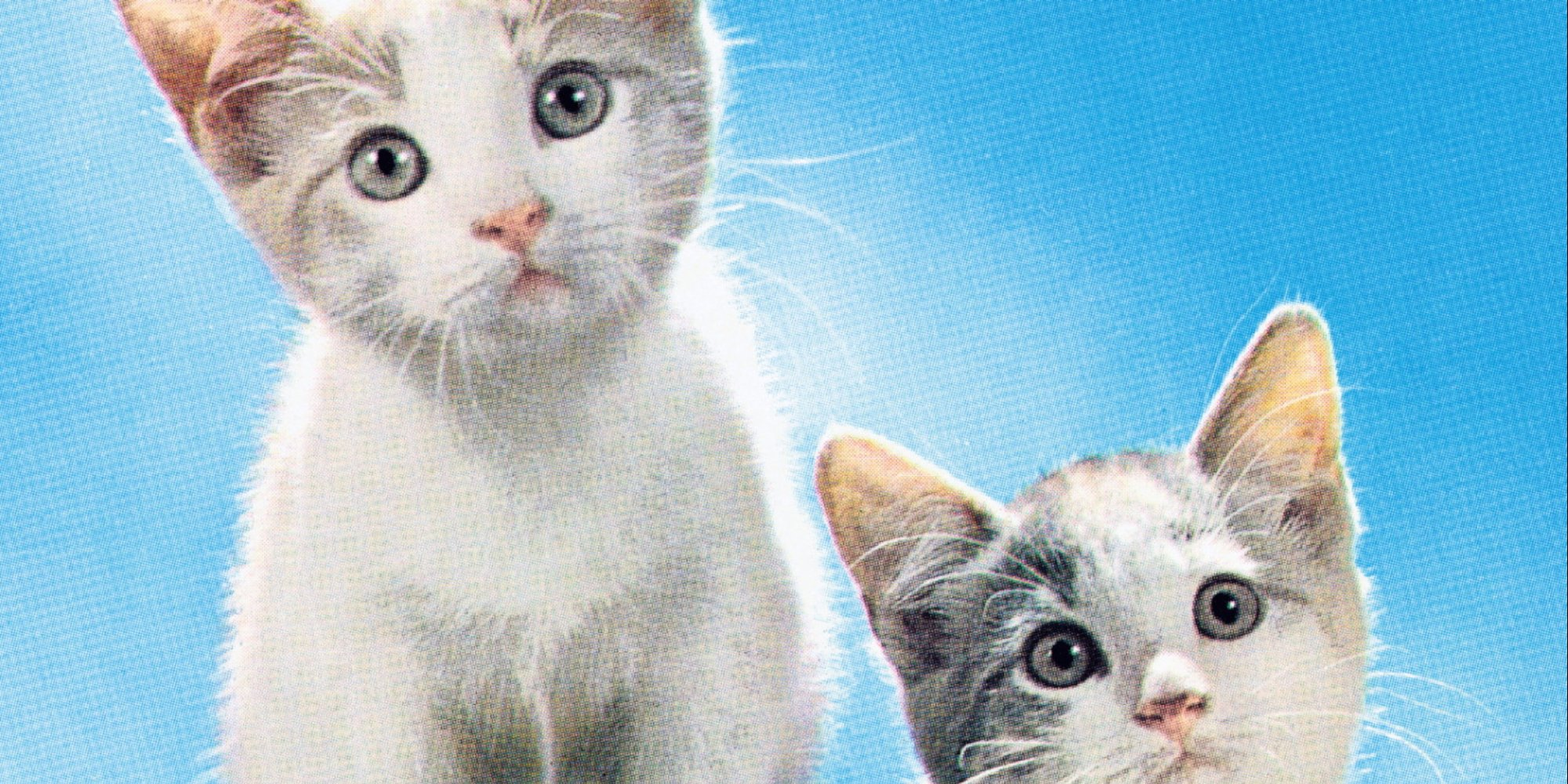 The Top 100 Most Adorable and Cute Cat Names | HuffPost
