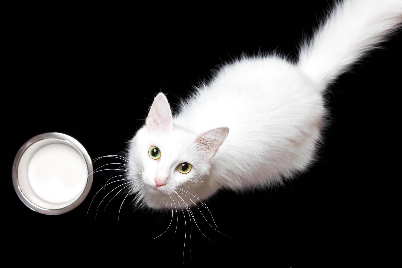 cat, Close-up, Domestic, Fluffy, Fur, HQ Photo