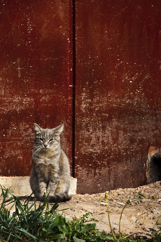 Cat, Animal, Domestic, Feline, Grass, HQ Photo