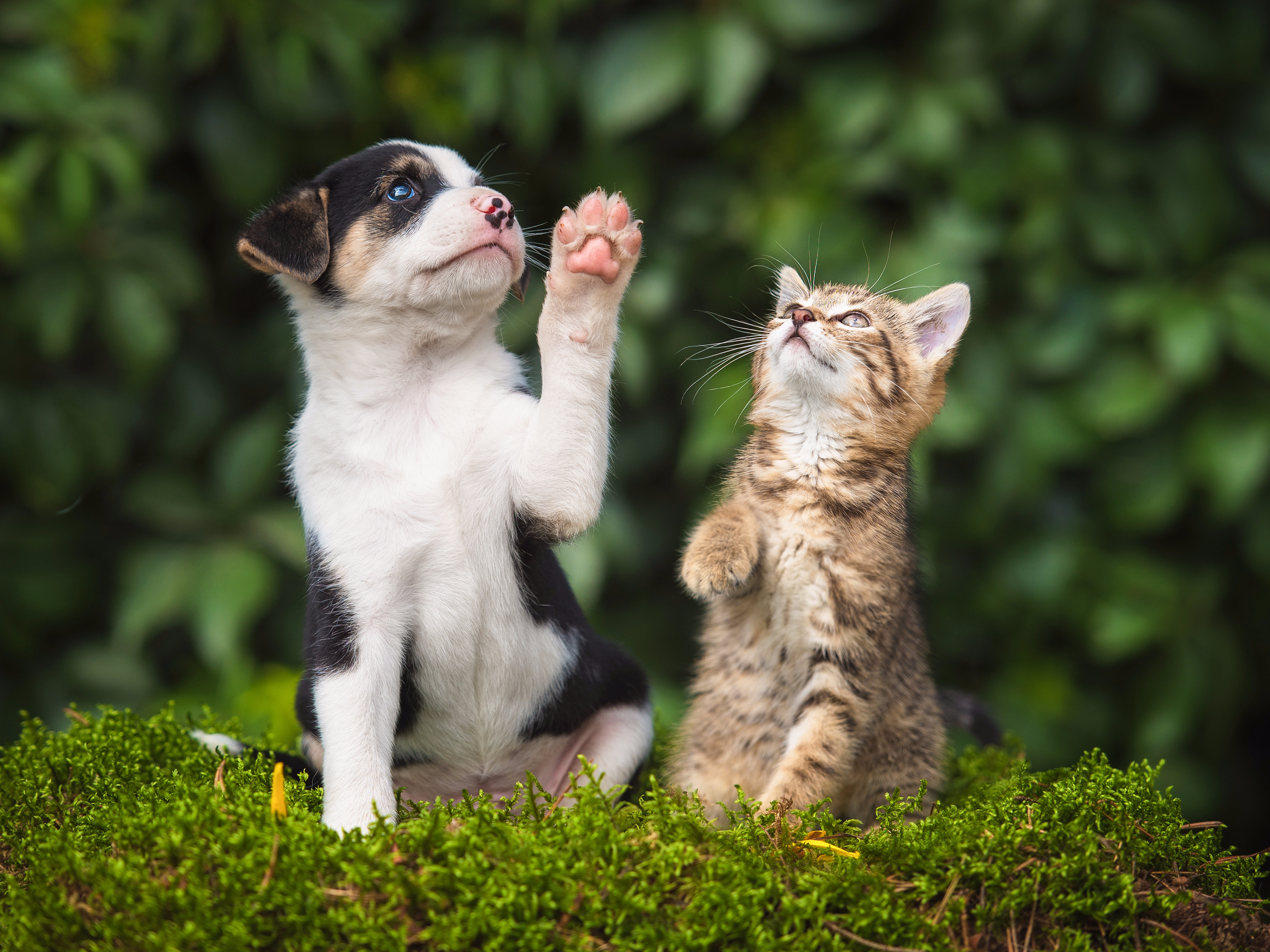 A pet expert explains the differences between dog and cat owners ...