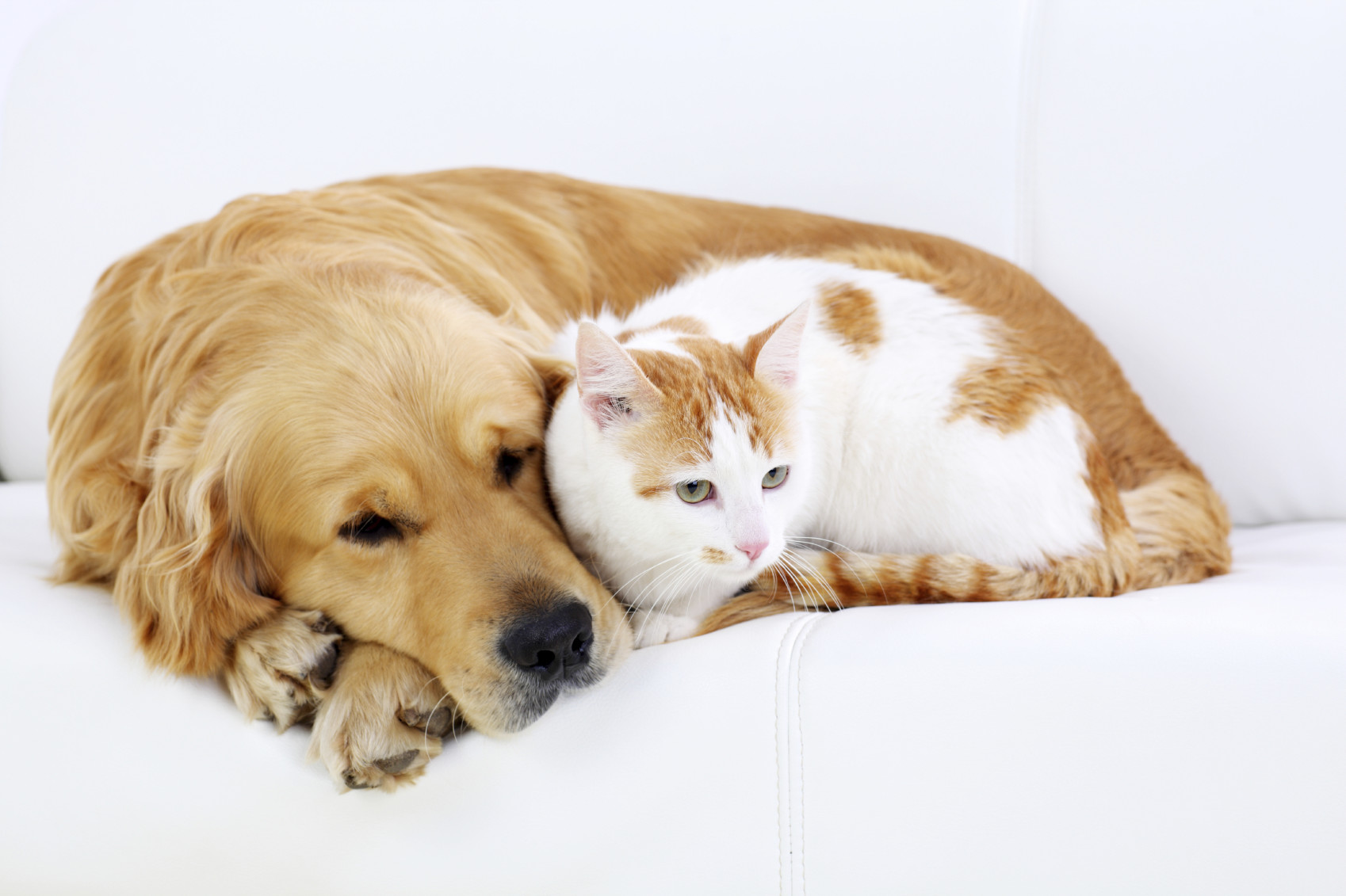 Famous Quotes About Dogs and Cats | Pets World