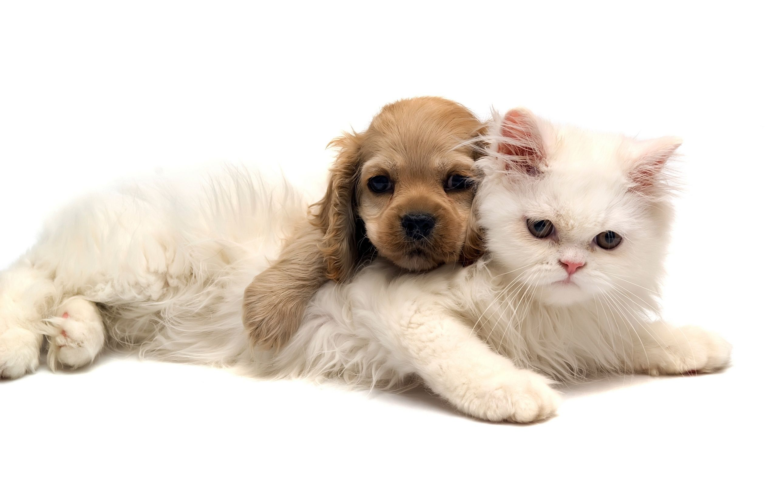Baby cats and dogs pics wallpaper | Big house | Pinterest | Dog, Cat ...