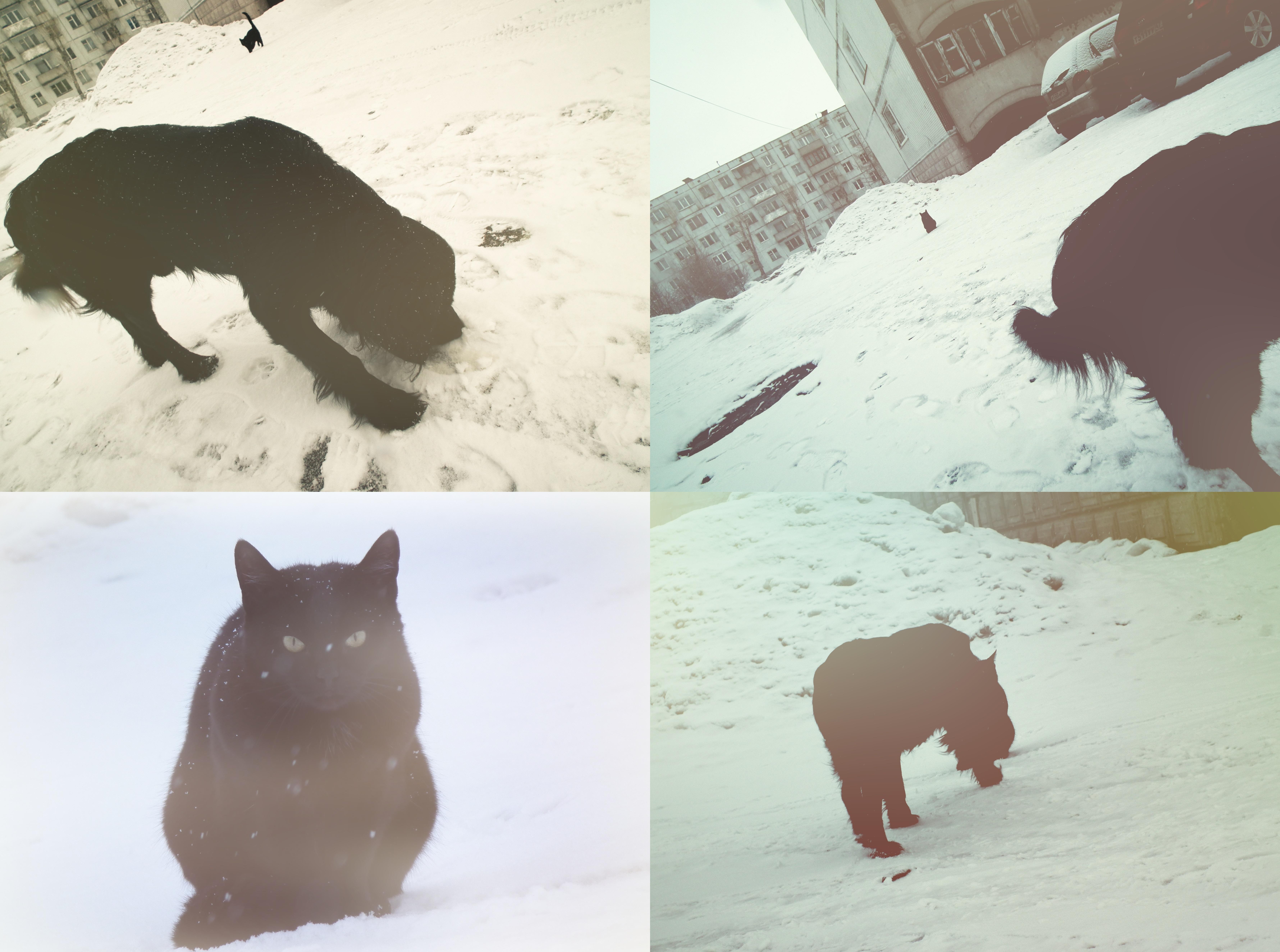 Cat and Dog, Cat, Dog, Finland, Pets, HQ Photo