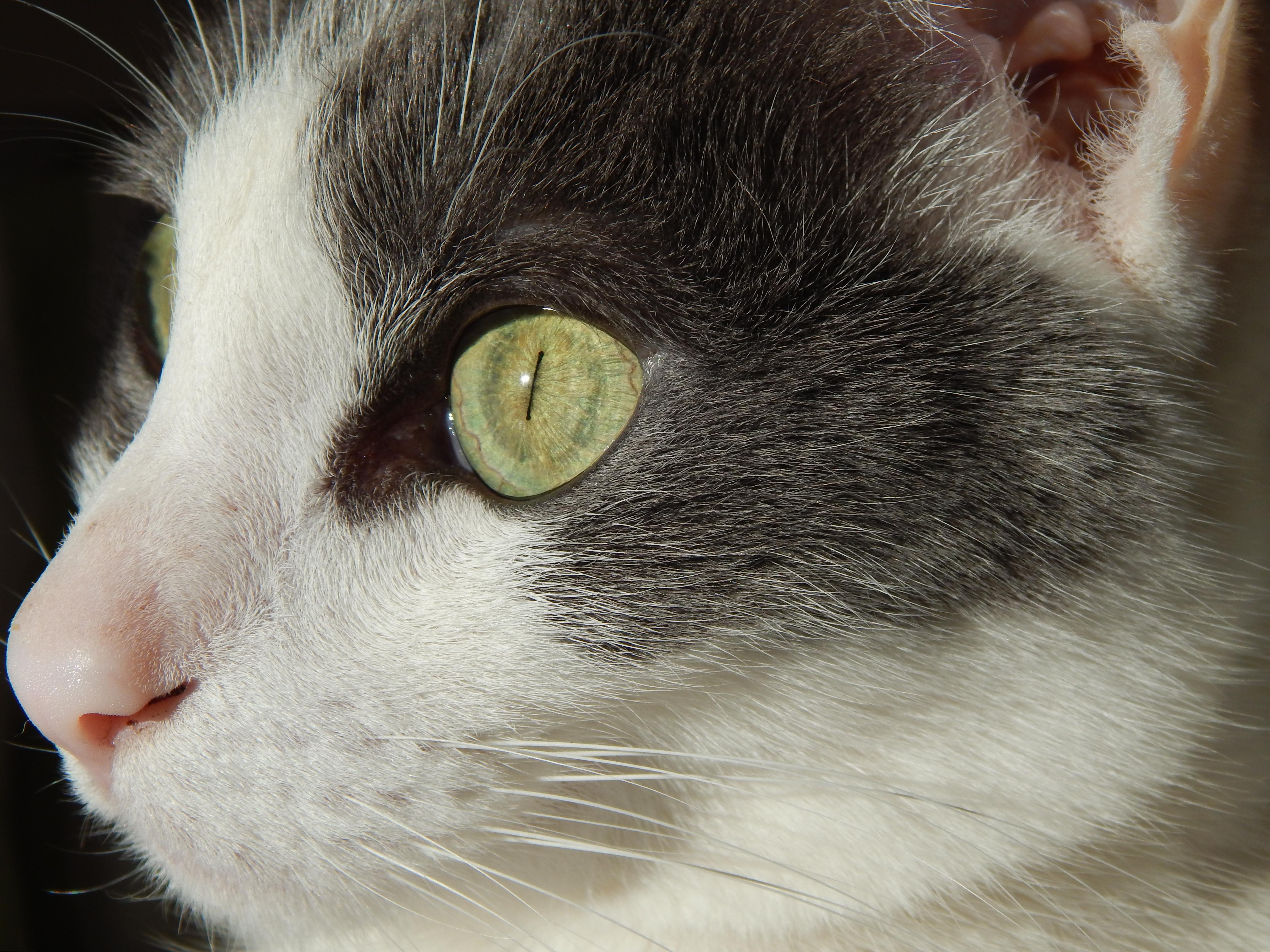 Cat closeup, Cat, Closeup, Feline, Fur, HQ Photo