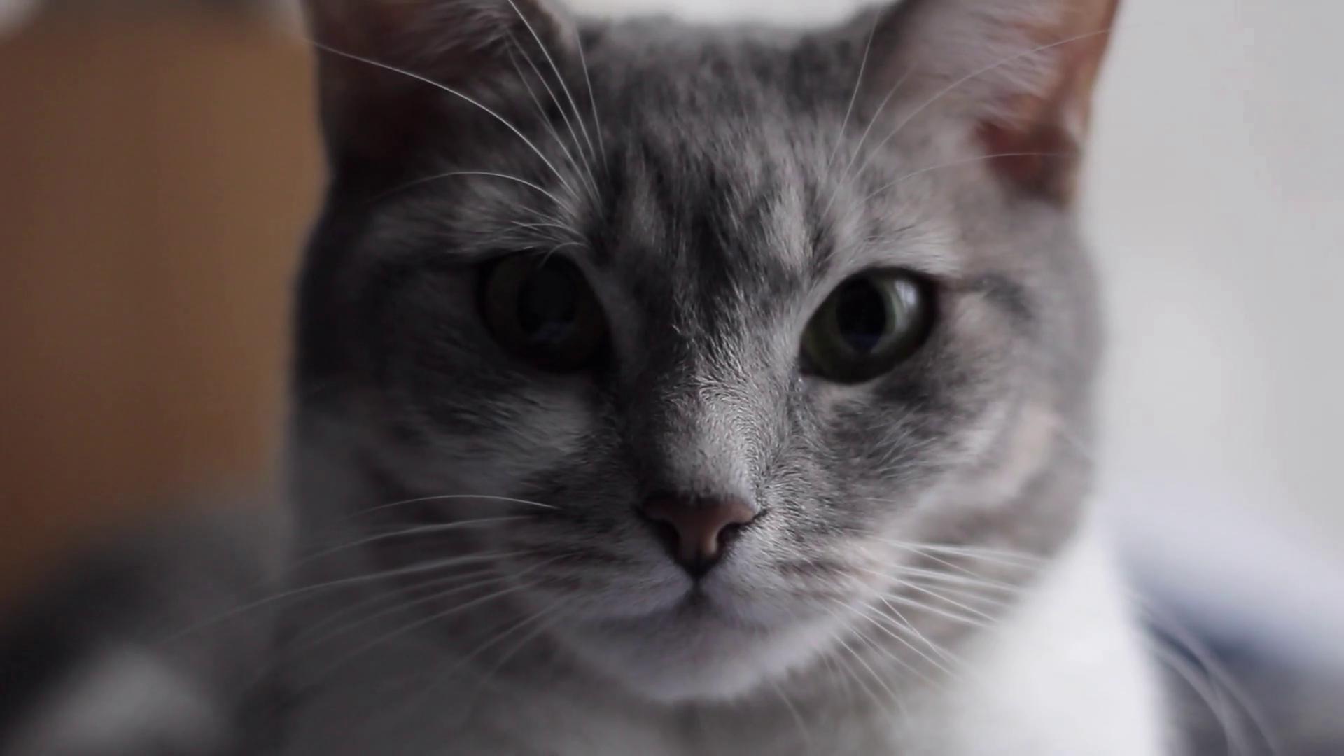 Cat Face, Closeup, Handheld Stock Video Footage - VideoBlocks