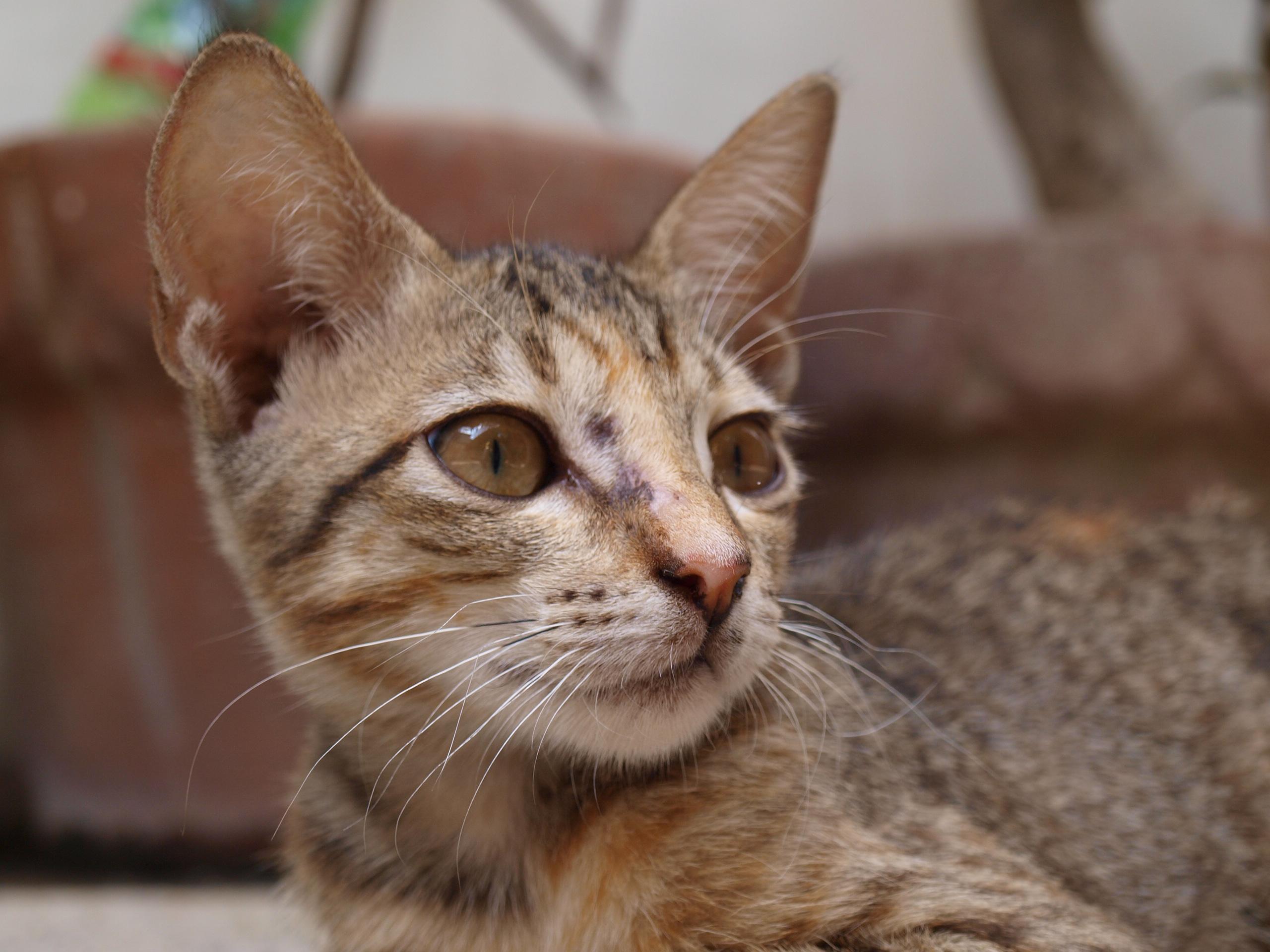 Cat closeup photo