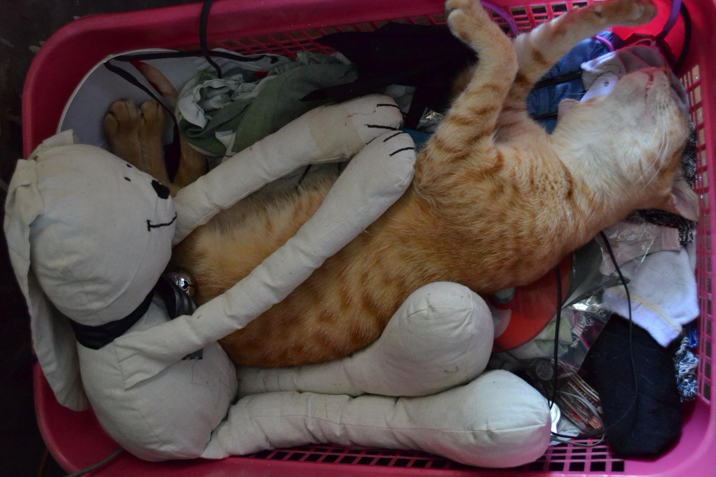 Cat in a basket photo